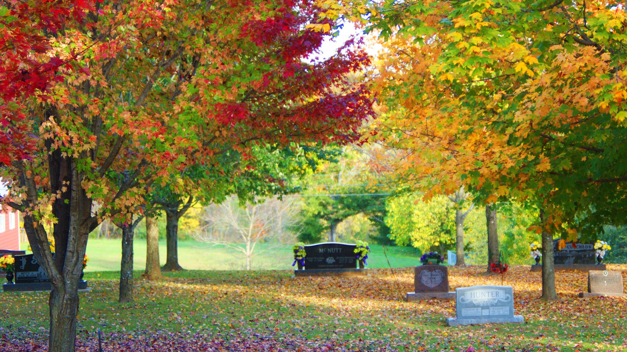 Photo in Landscape #leafs #trees #flowers #fall #dslr #camera #cam
