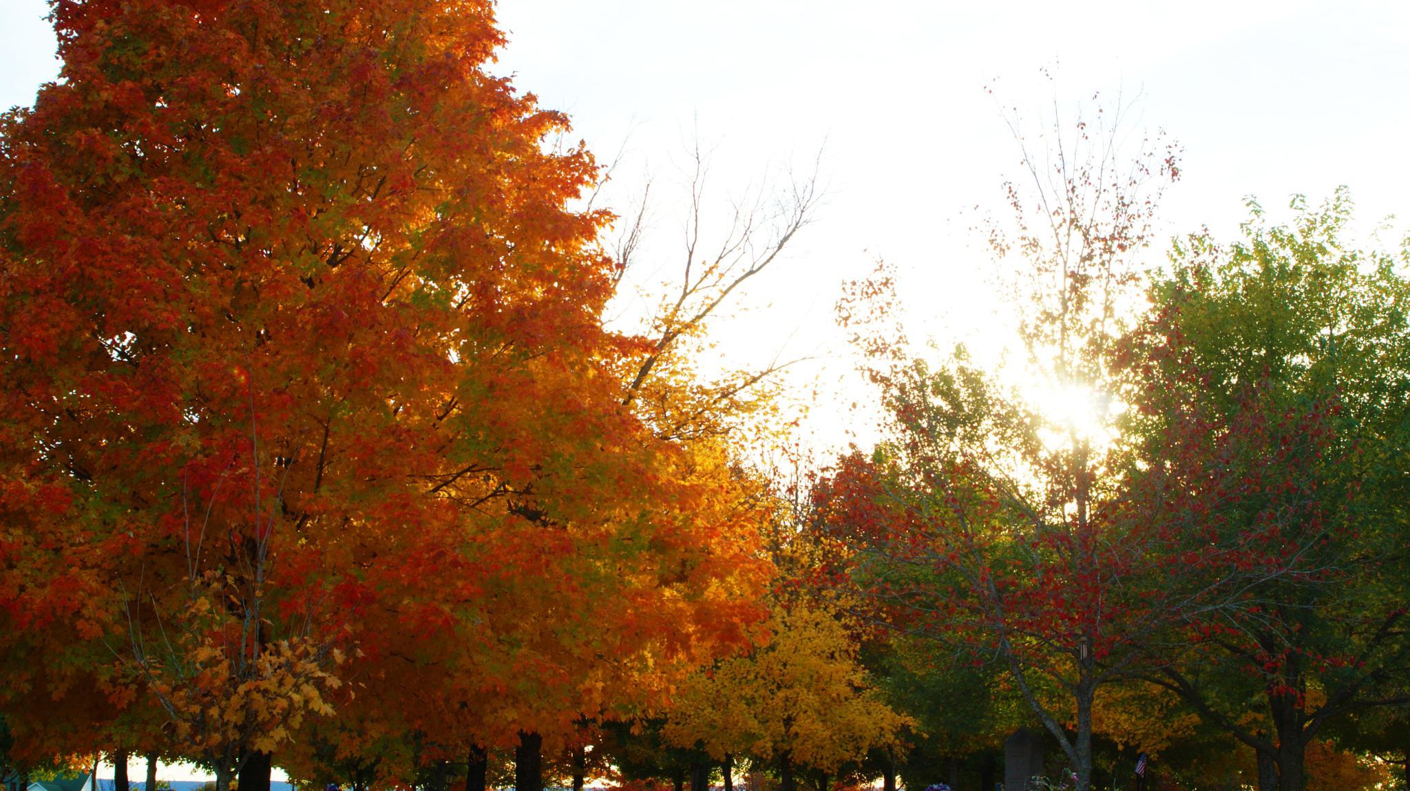 Photo in Landscape #fire #trees #fall #cemetery #dslr #camera #cam