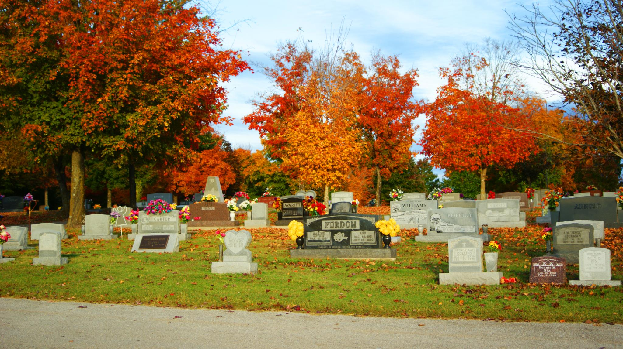 Photo in Landscape #fall #cemetery #trees #flowers #dslr #camera #cam