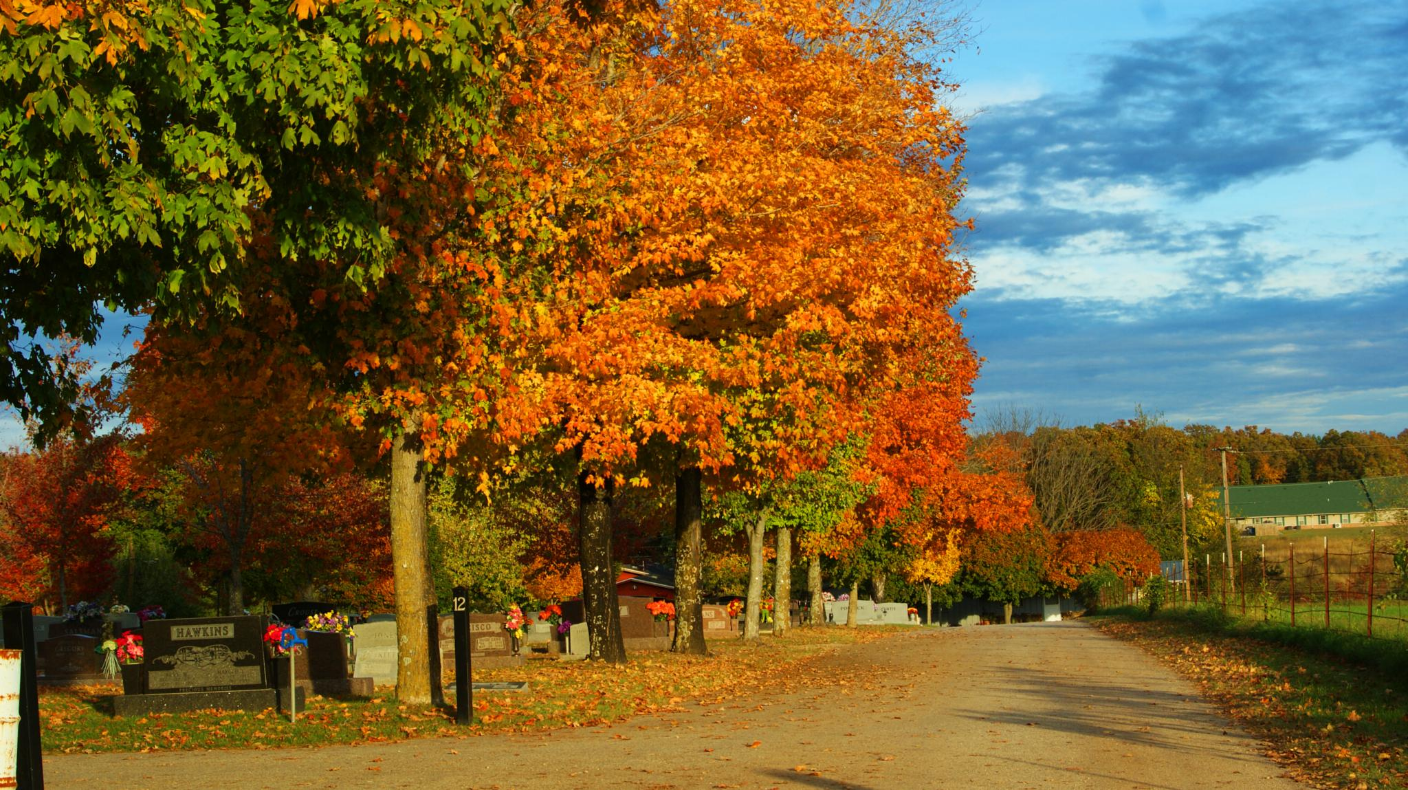 Photo in Landscape #blue #skies #trees #flowers #fall #dslr #camera #cam