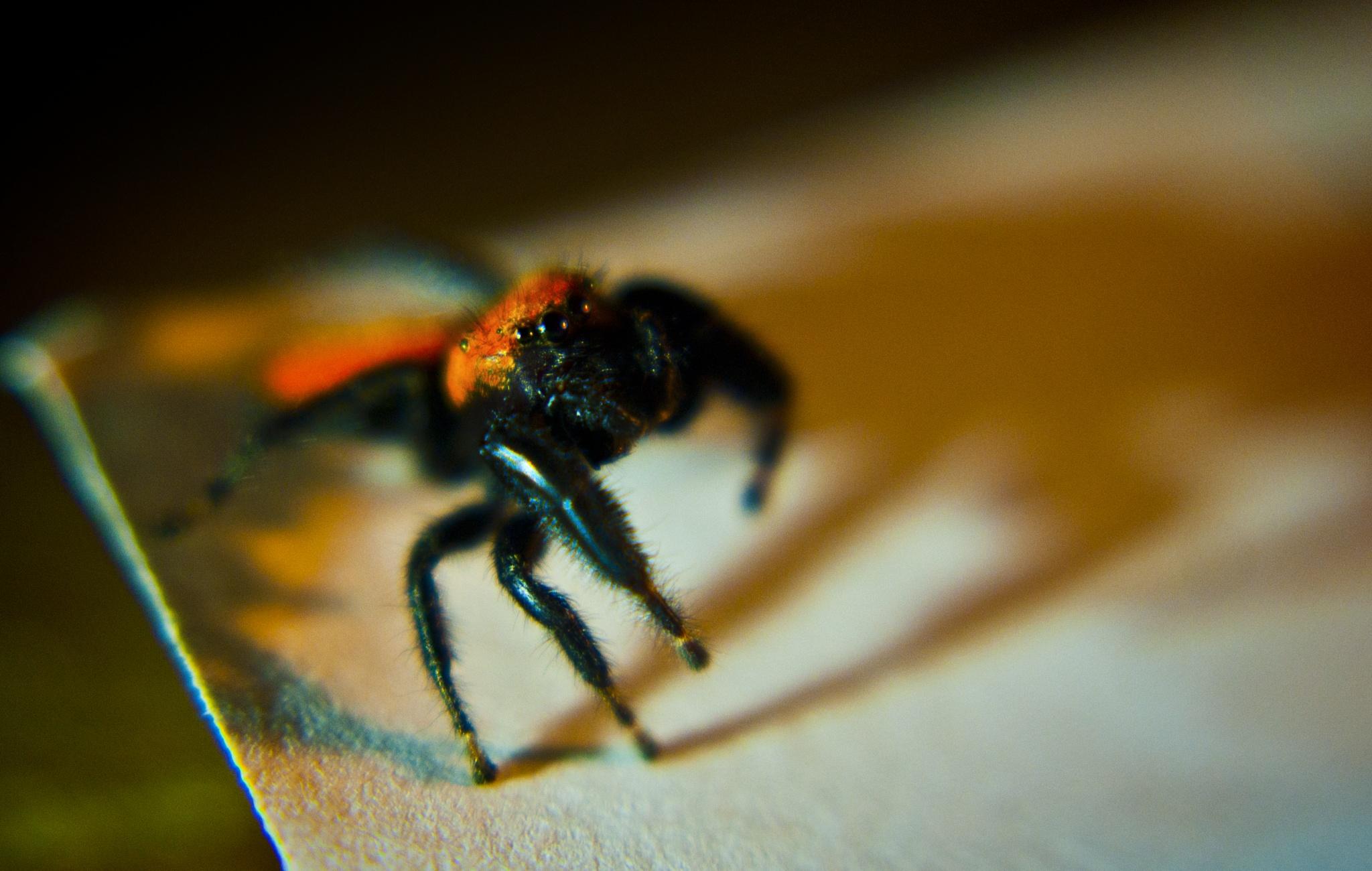 Orange Spider by Austin Devine