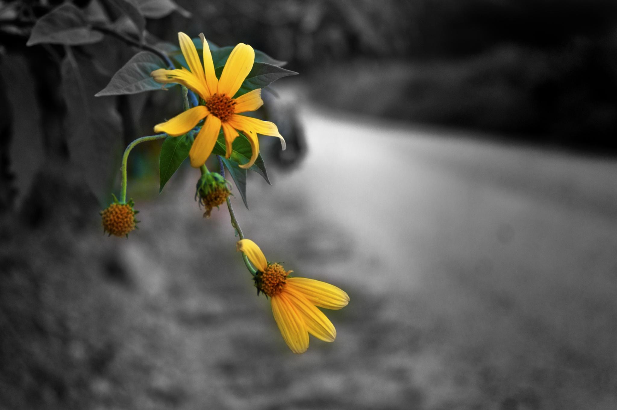 Roadside Flowers by Austin Devine