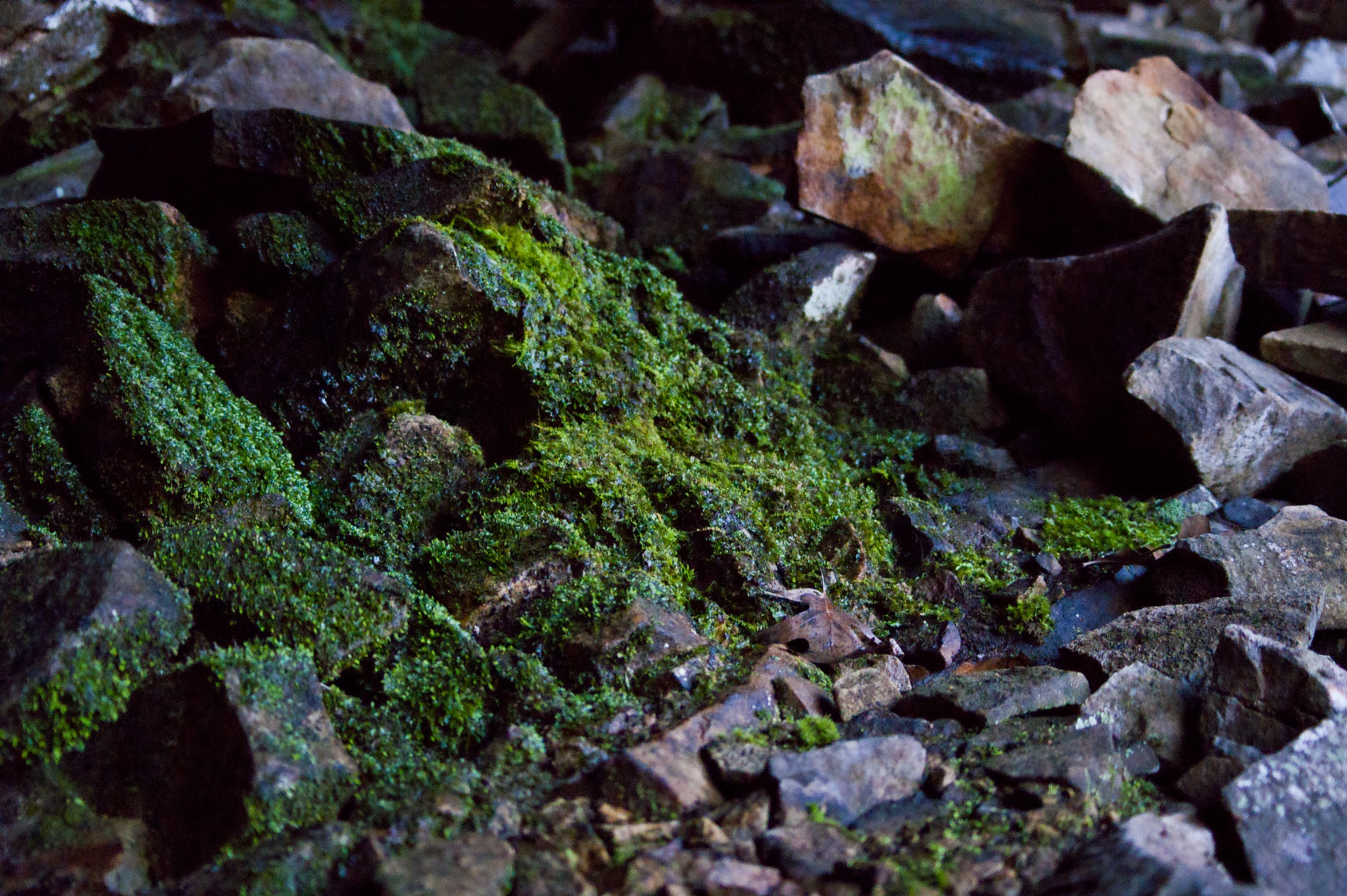 Mossy Rocks by Austin Devine