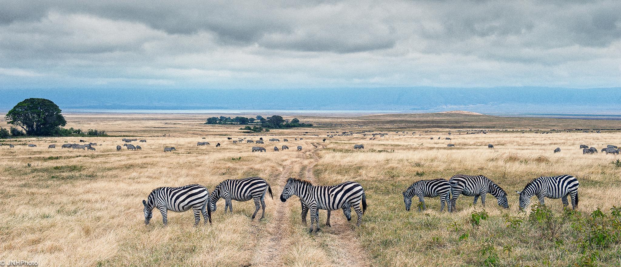 Ngorongoro Creator by jnhphoto