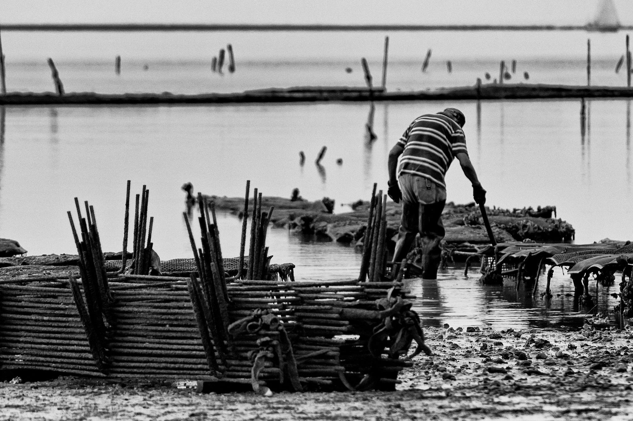 Nettoyage du parc à huitres by Fabrice Denis Photography