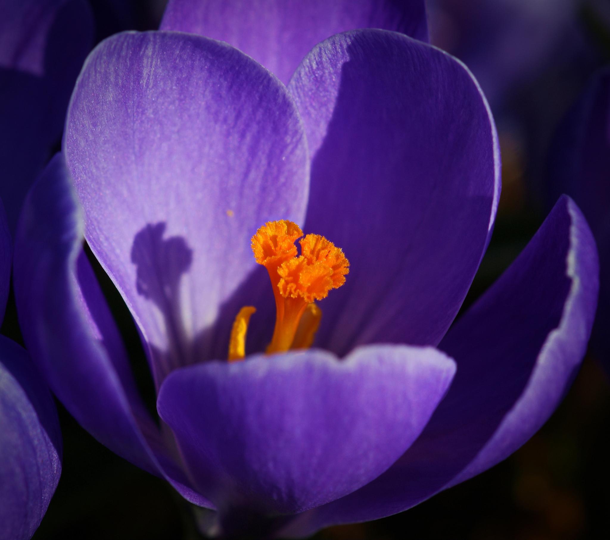 Purple by Ad Spruijt