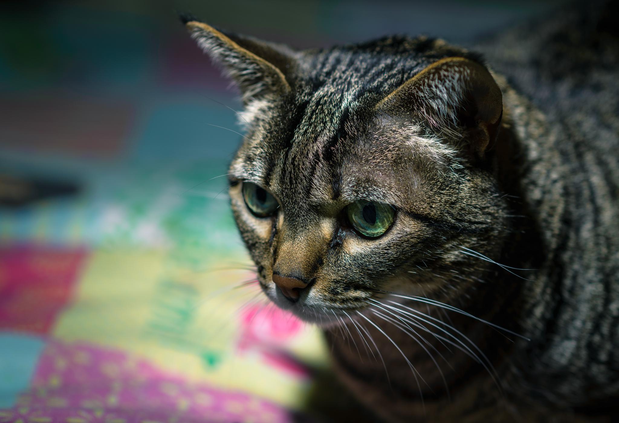 Cat.Alina II by Eduardo Regueiro