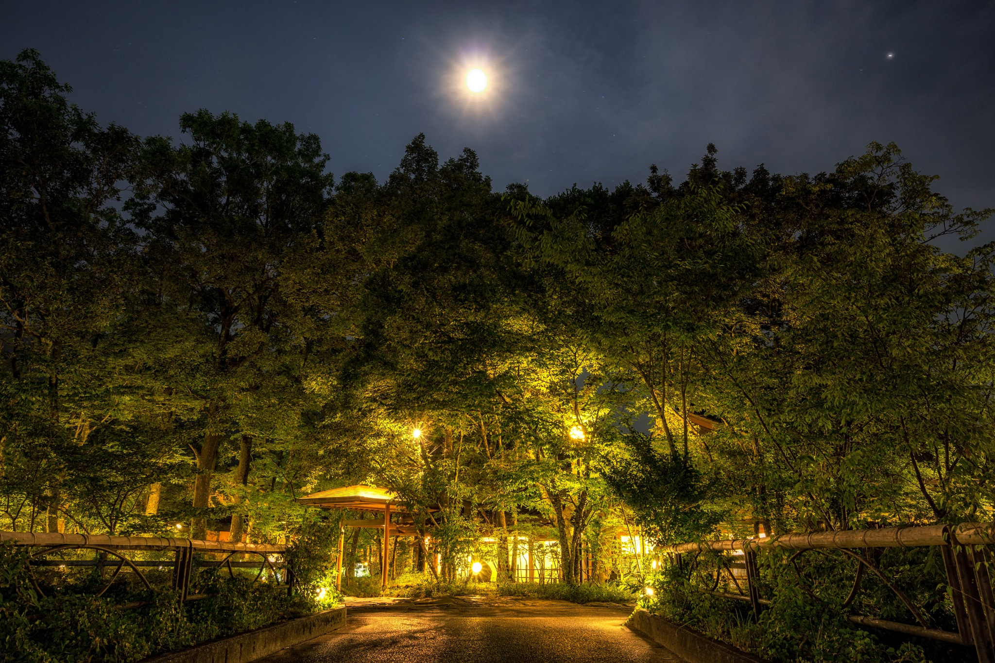 Yufuin golden forest at night by Aaron Choi
