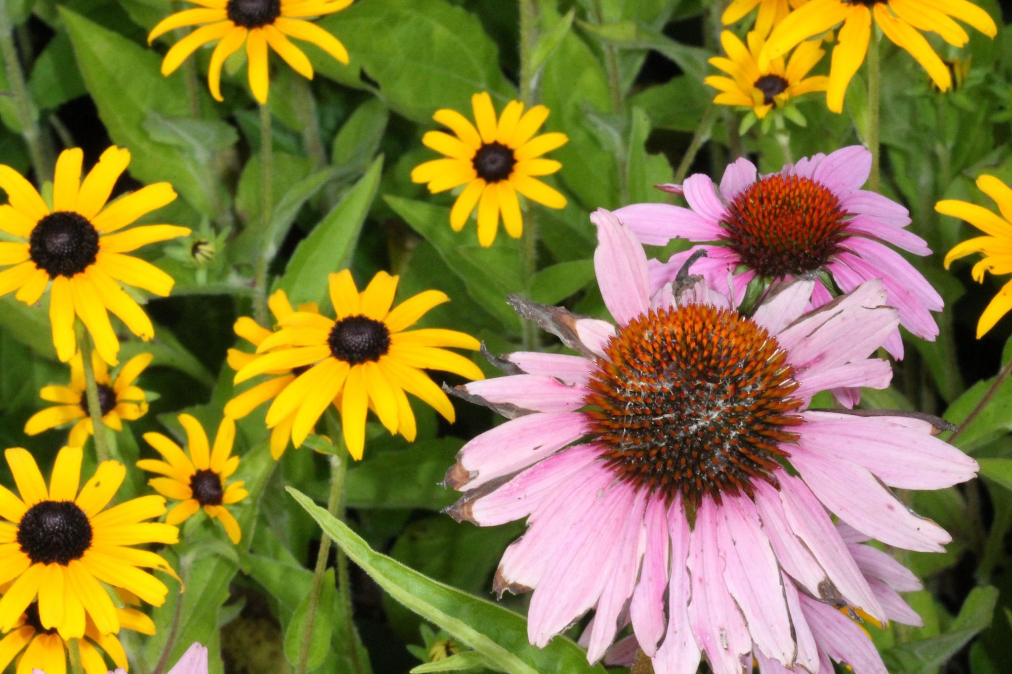 blooming death by Ancilleno Leno Davis
