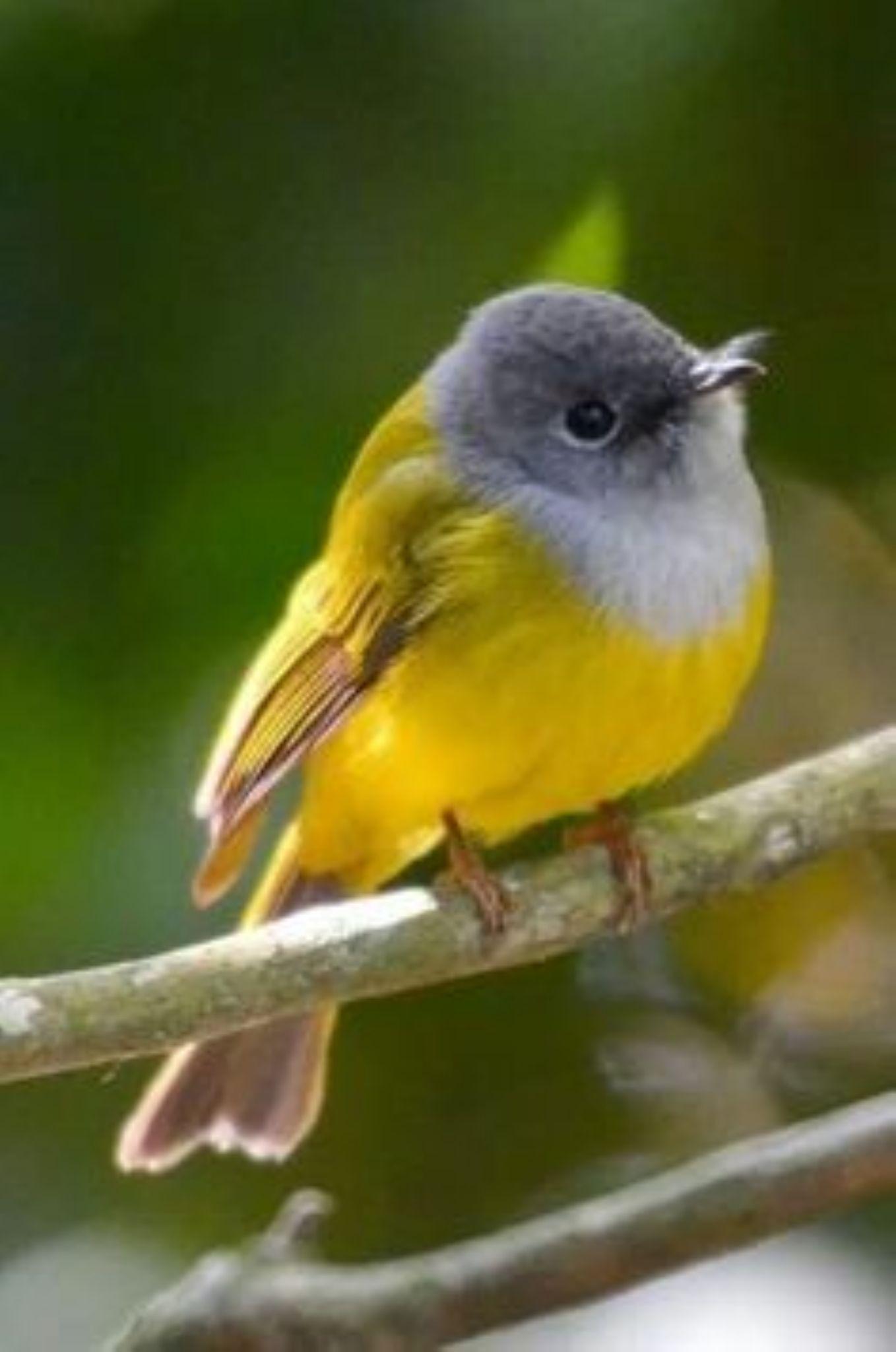 litle birde by abdelhadisatly