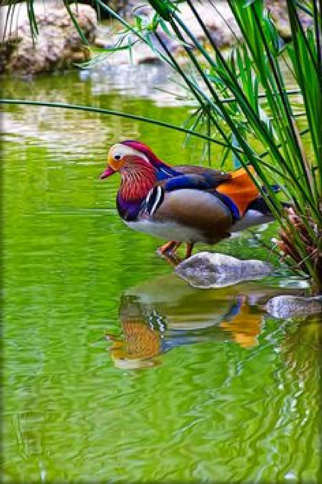 bird by abdelhadisatly