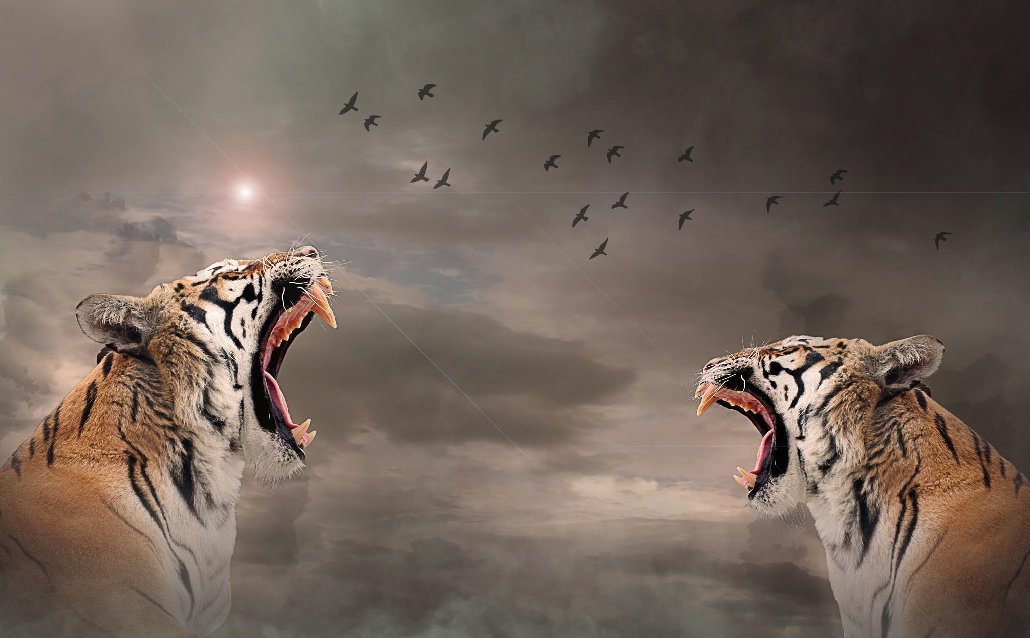 Tigers by Richard Thiel Sartawsky