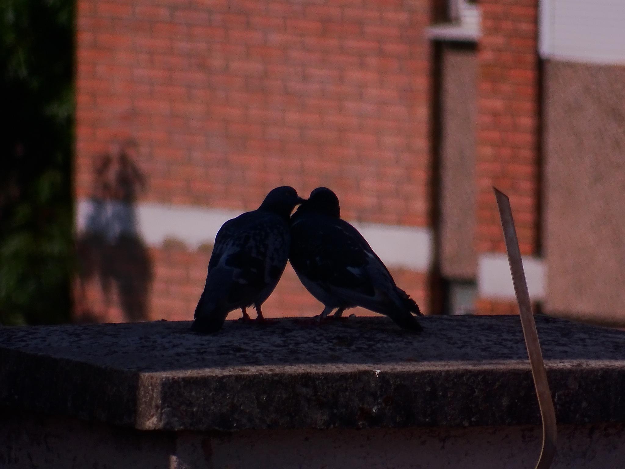 love... by nenadbozickovic