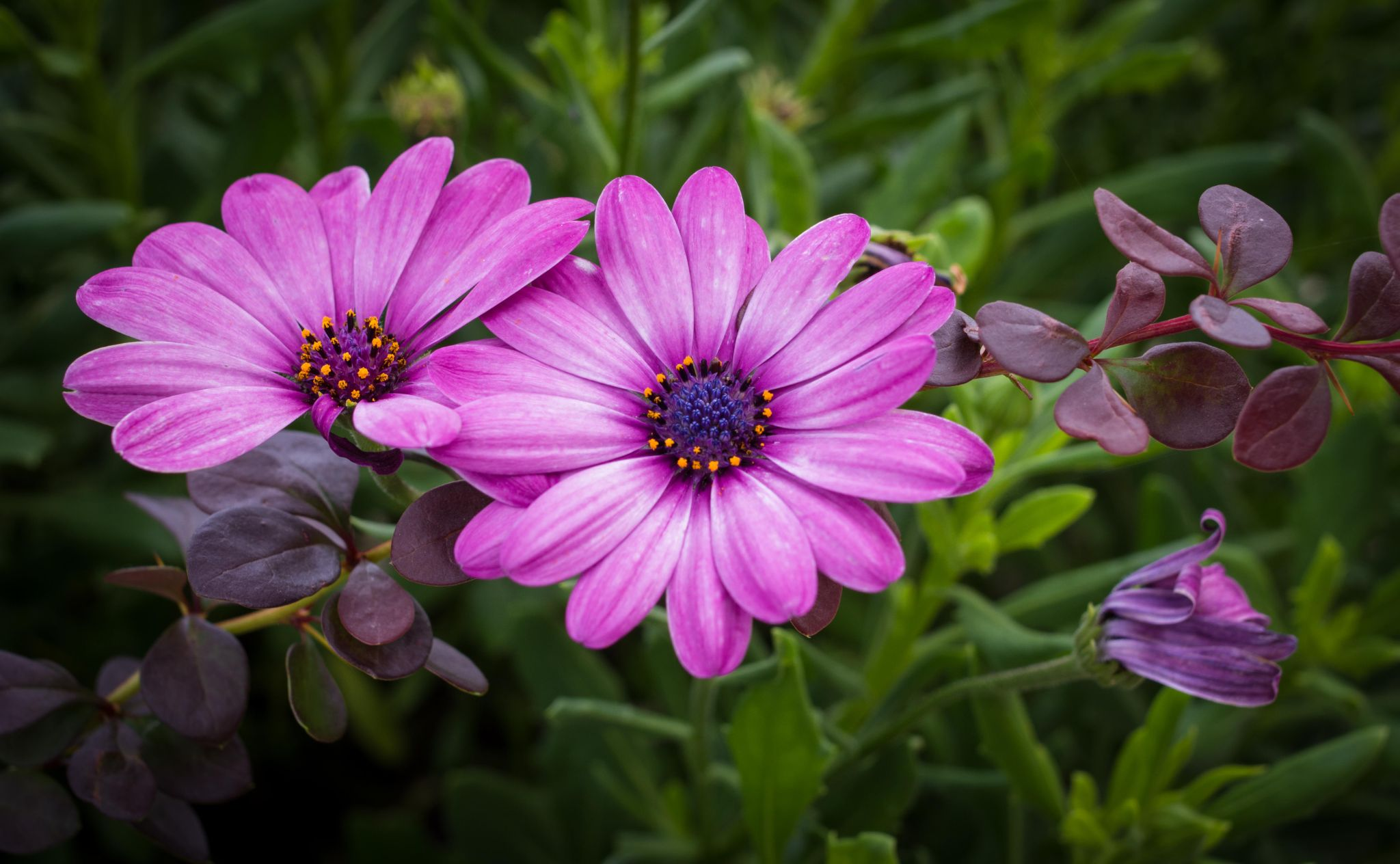 two flowers .. by boris.romac