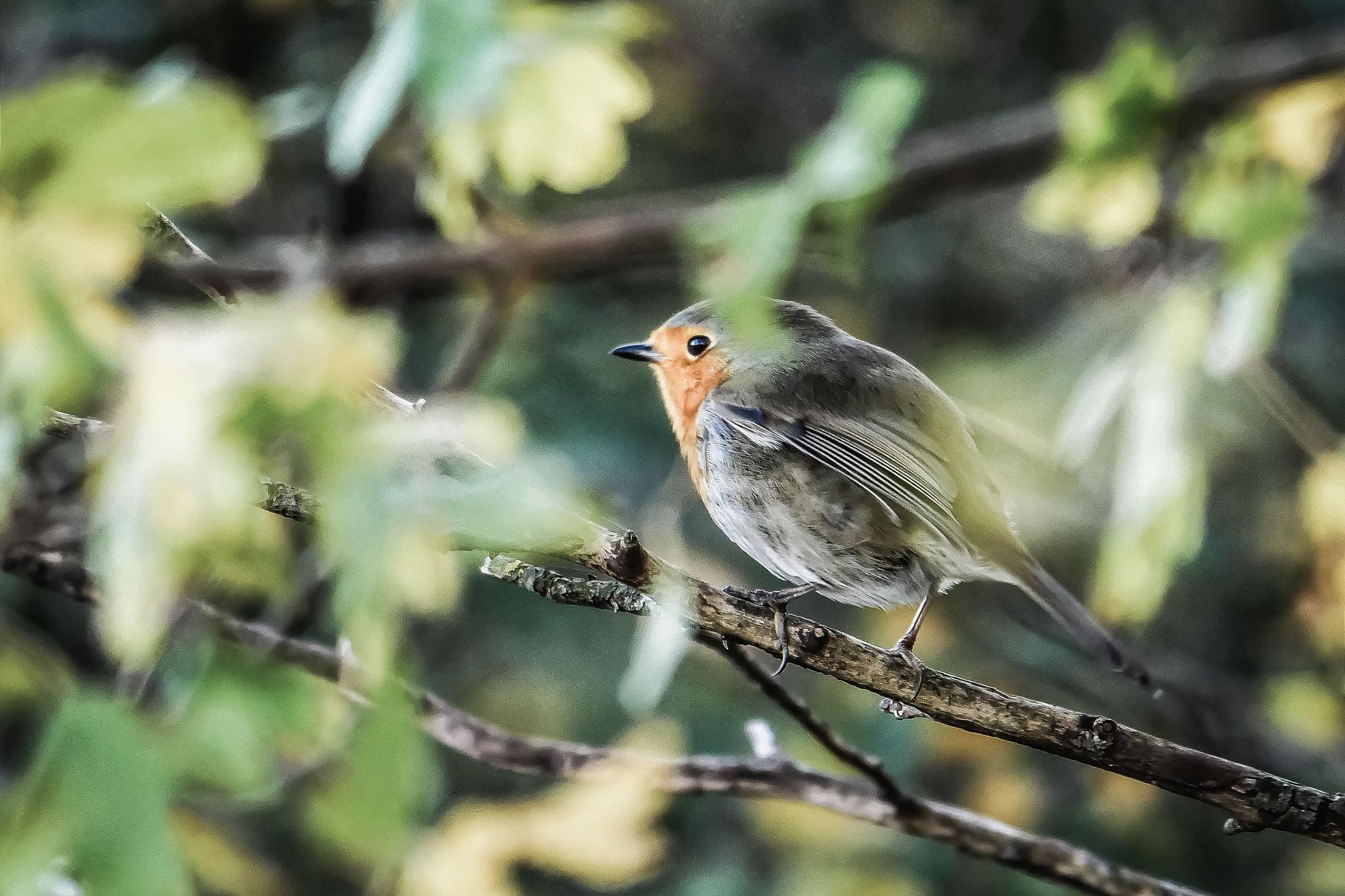 hiding birdie  by boris.romac