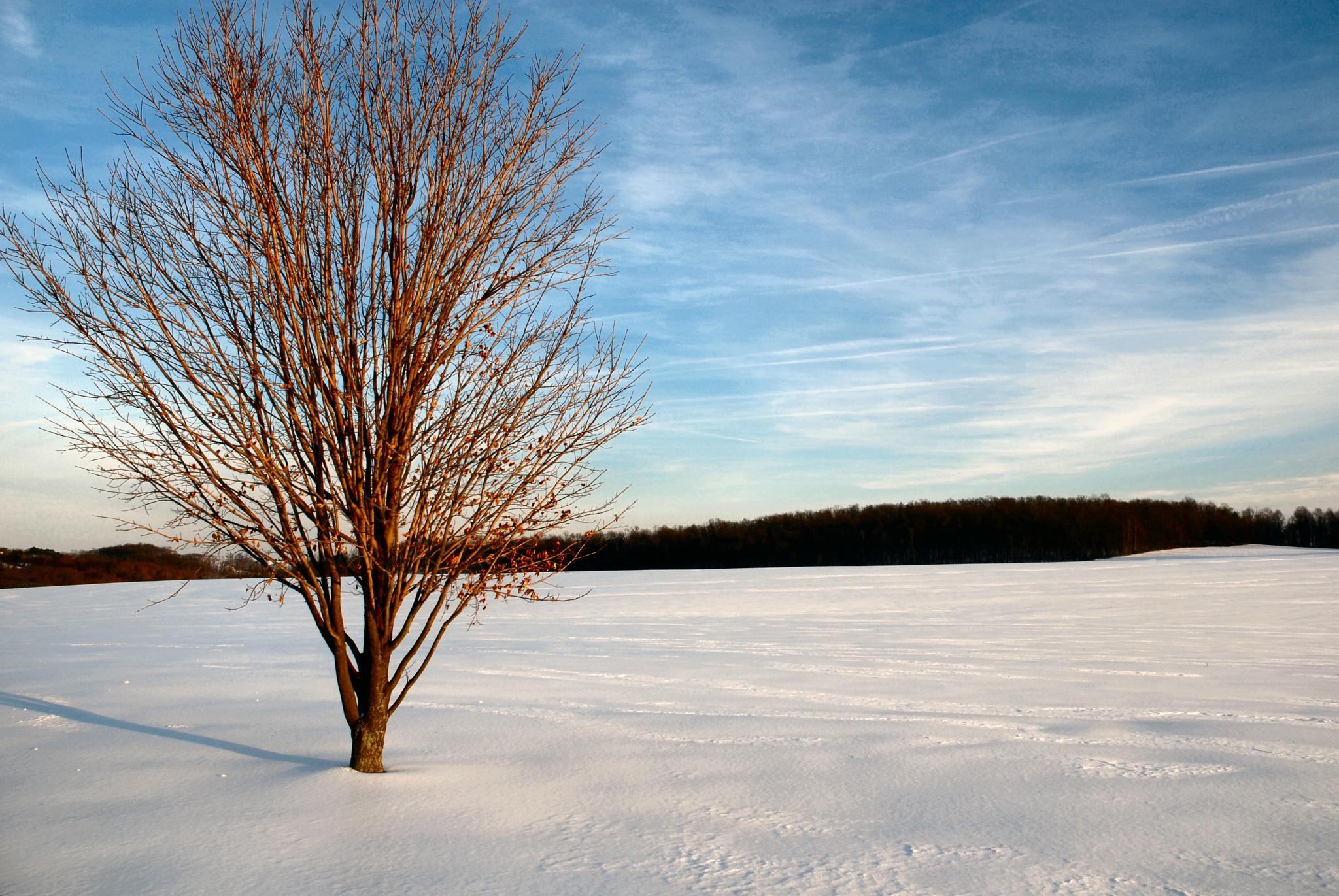 Tree in Snow Covered Field by JeffViaPhotography