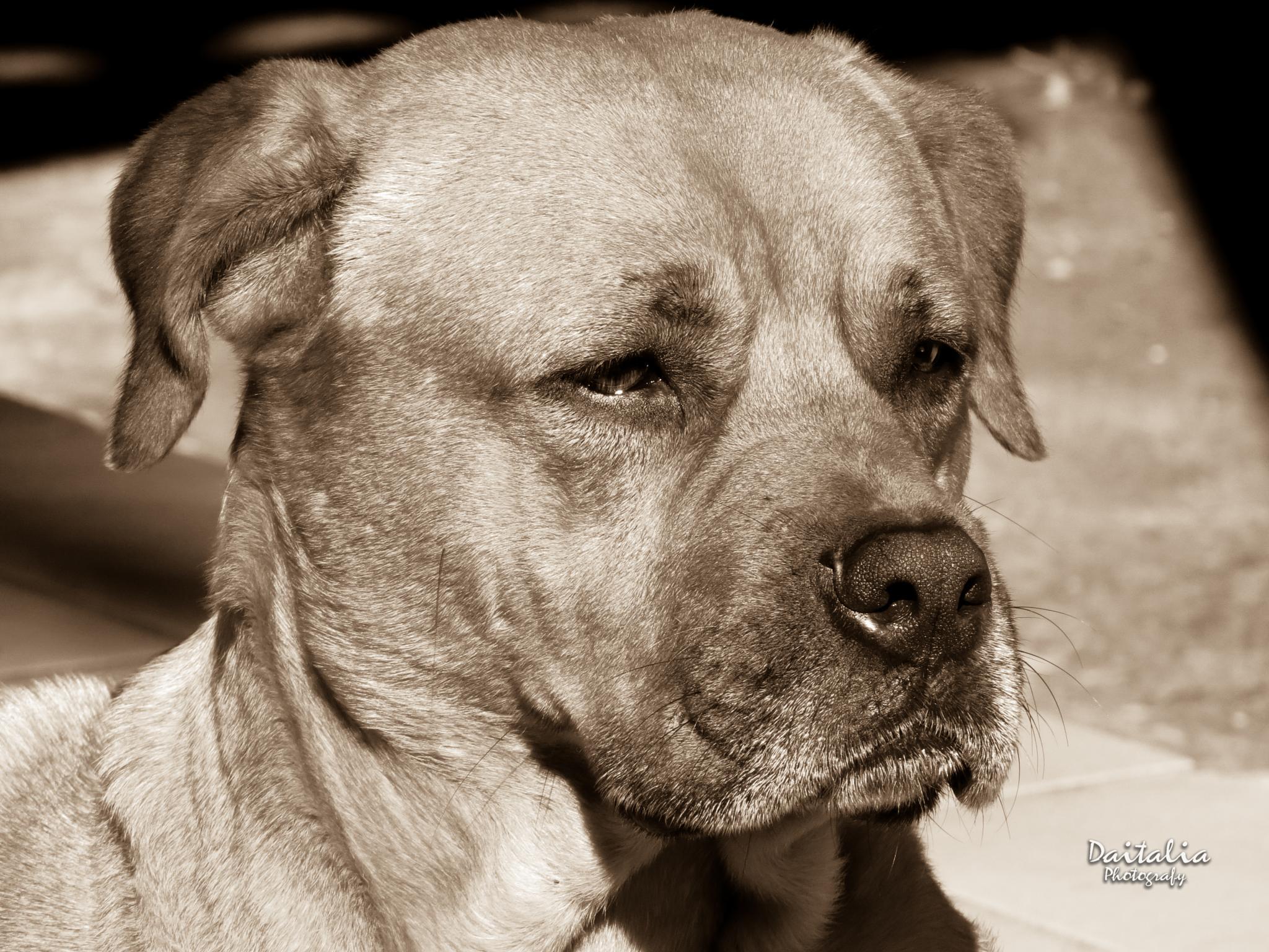 Dog by Daitalia Photography
