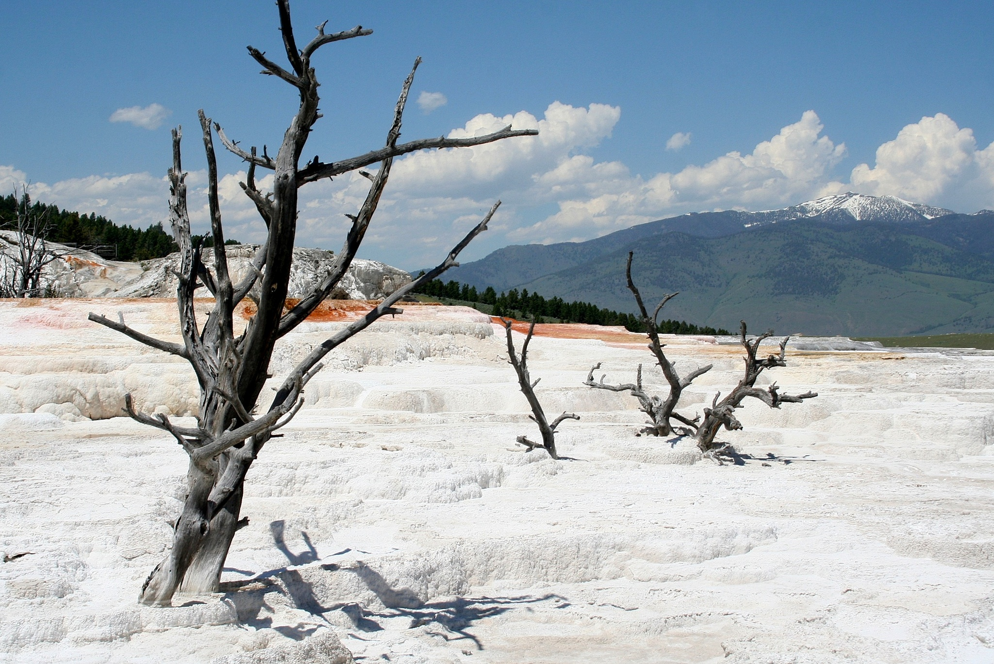 Mammoth Hot Springs, Yellowstone National Park by katze
