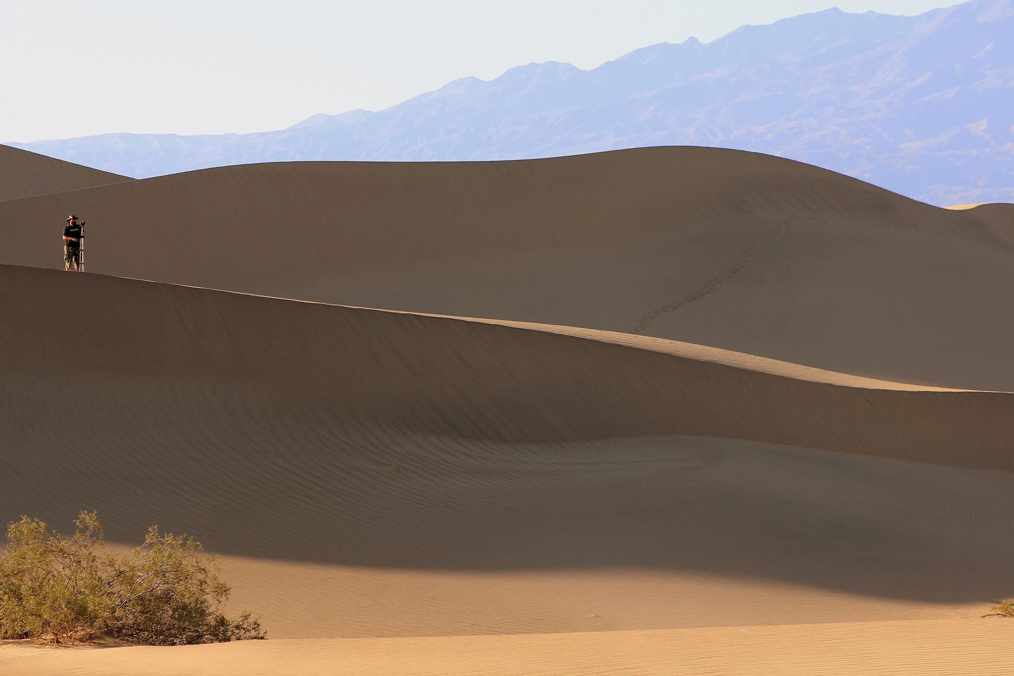 Mesquite flat sand dunes, Death Valley National Park by katze