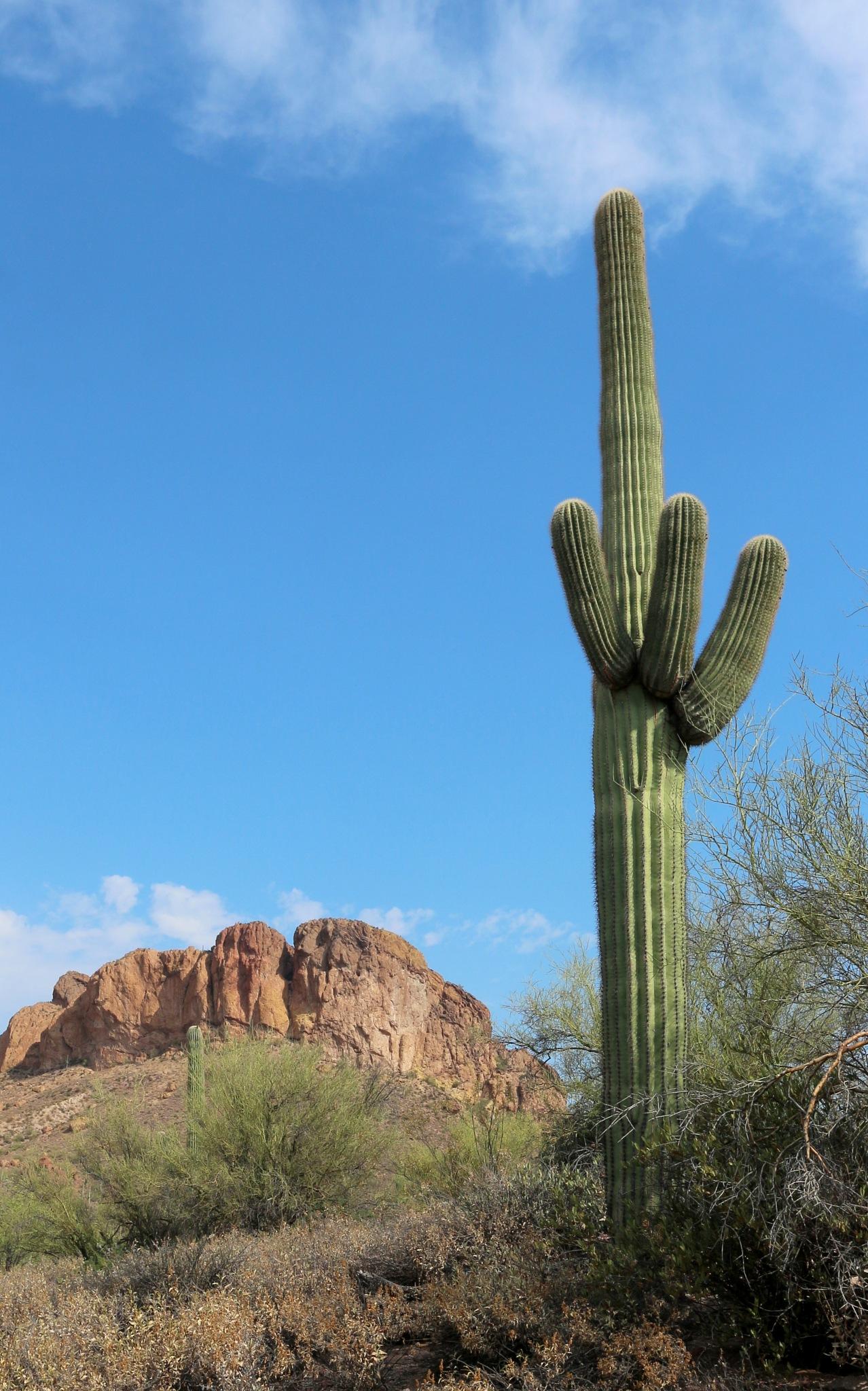 Saguaro, Apache Trail - AZ by katze
