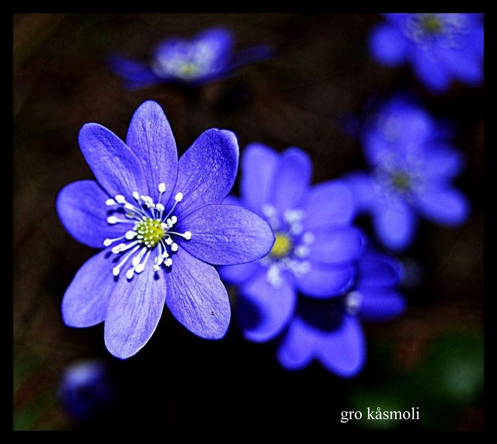 Spring by gro.kasmoli