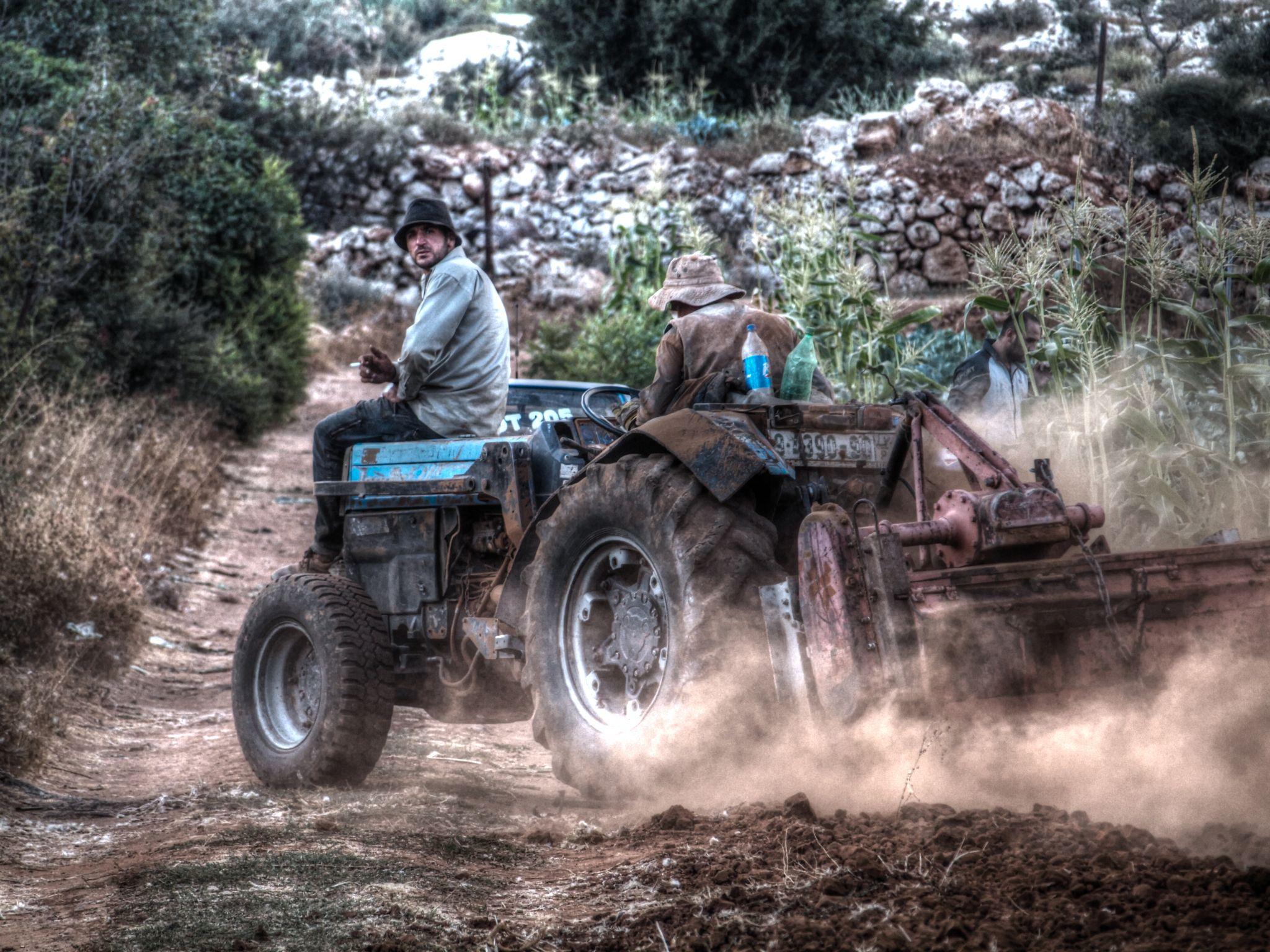 Harvest by AhmadZalloum