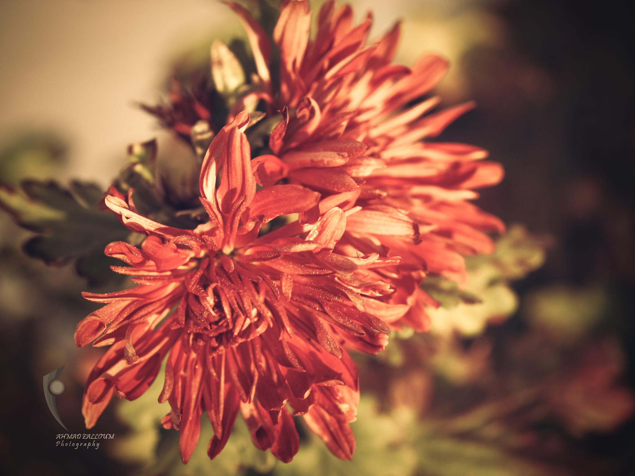 Photo in Nature #nature #macro #flower