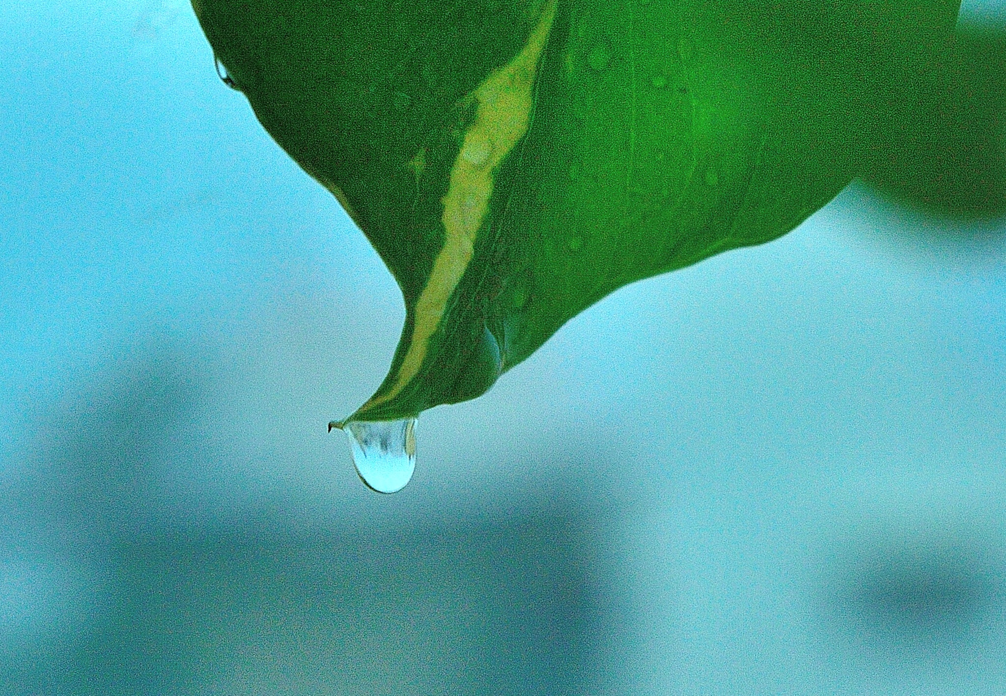 Be like a droplet on leaf!!! Detached!!!! by Sudharshan