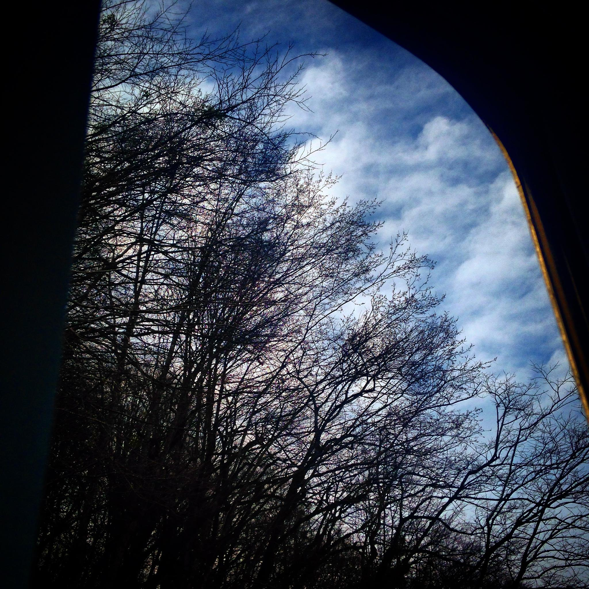 Above trees by sahoora83