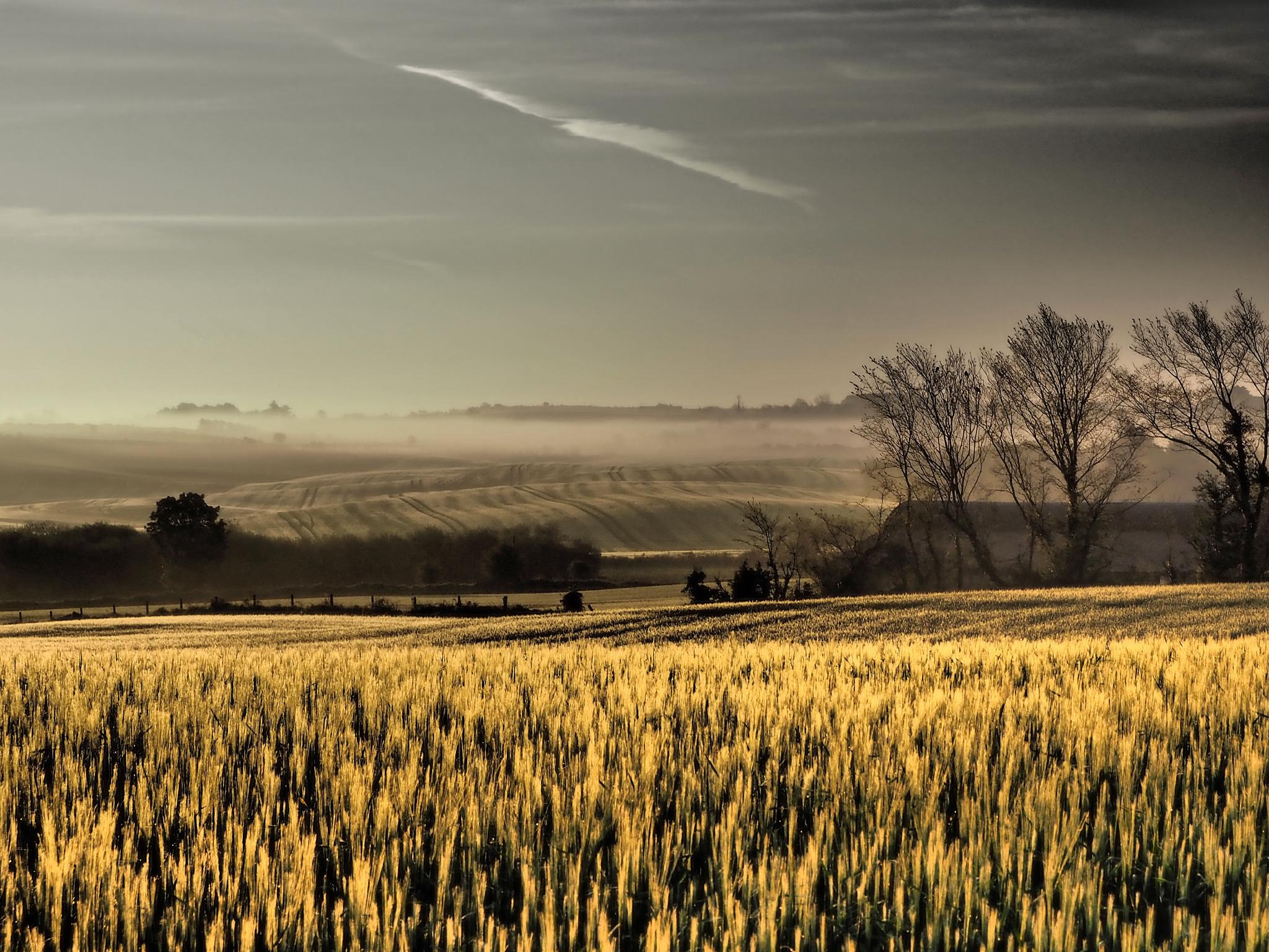Fields of Gold by jackie.tighe.10