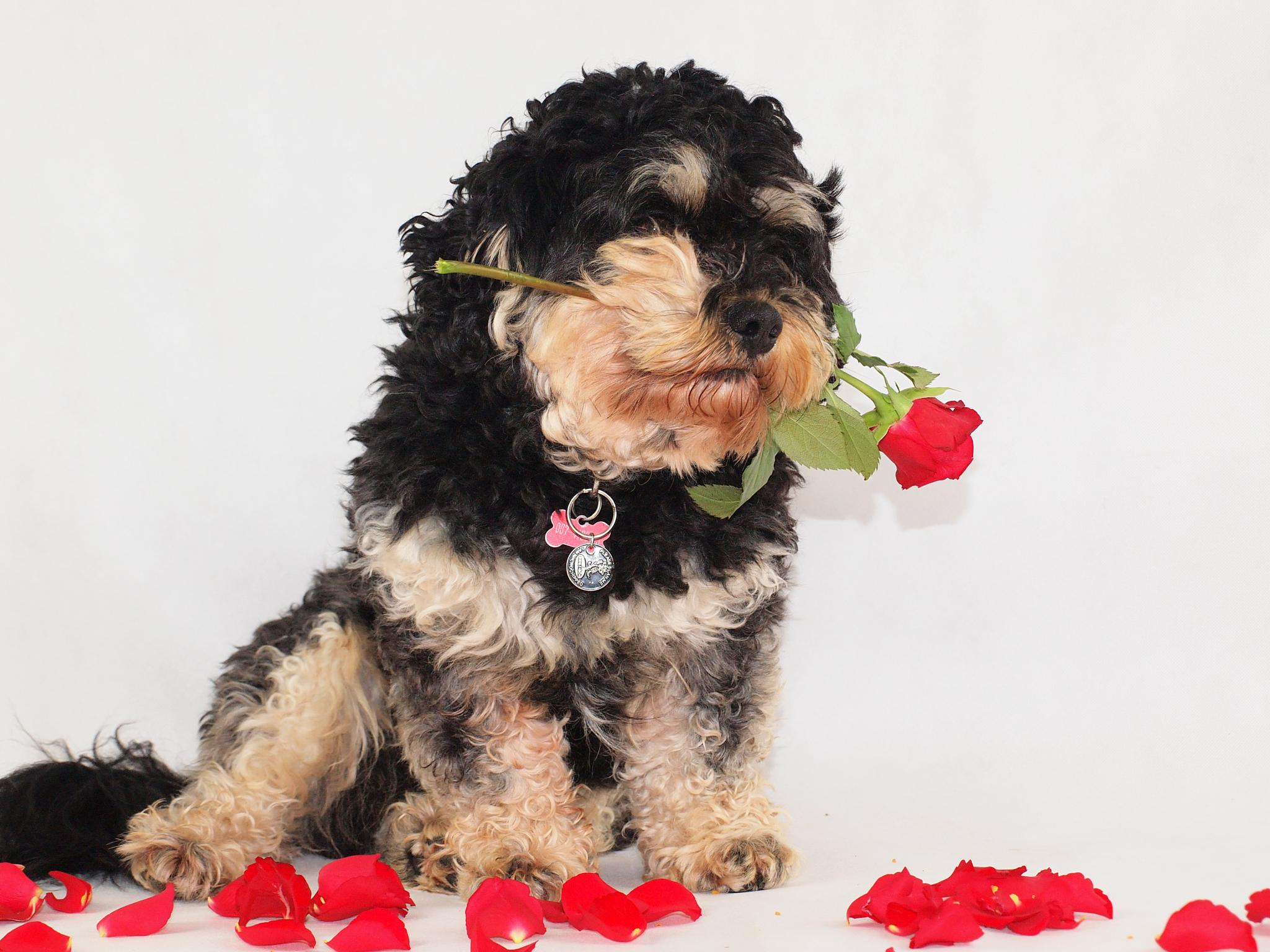 Photo in Random #dog #roses #love