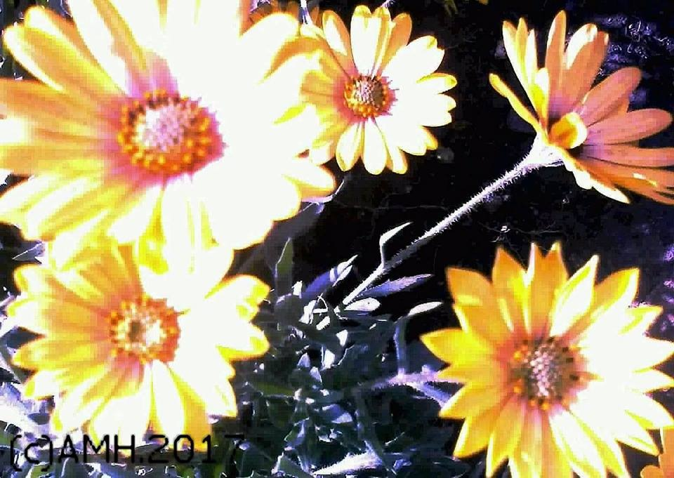 "An art photo: ""The Yellow Flowers"" by ailahokkanen59"