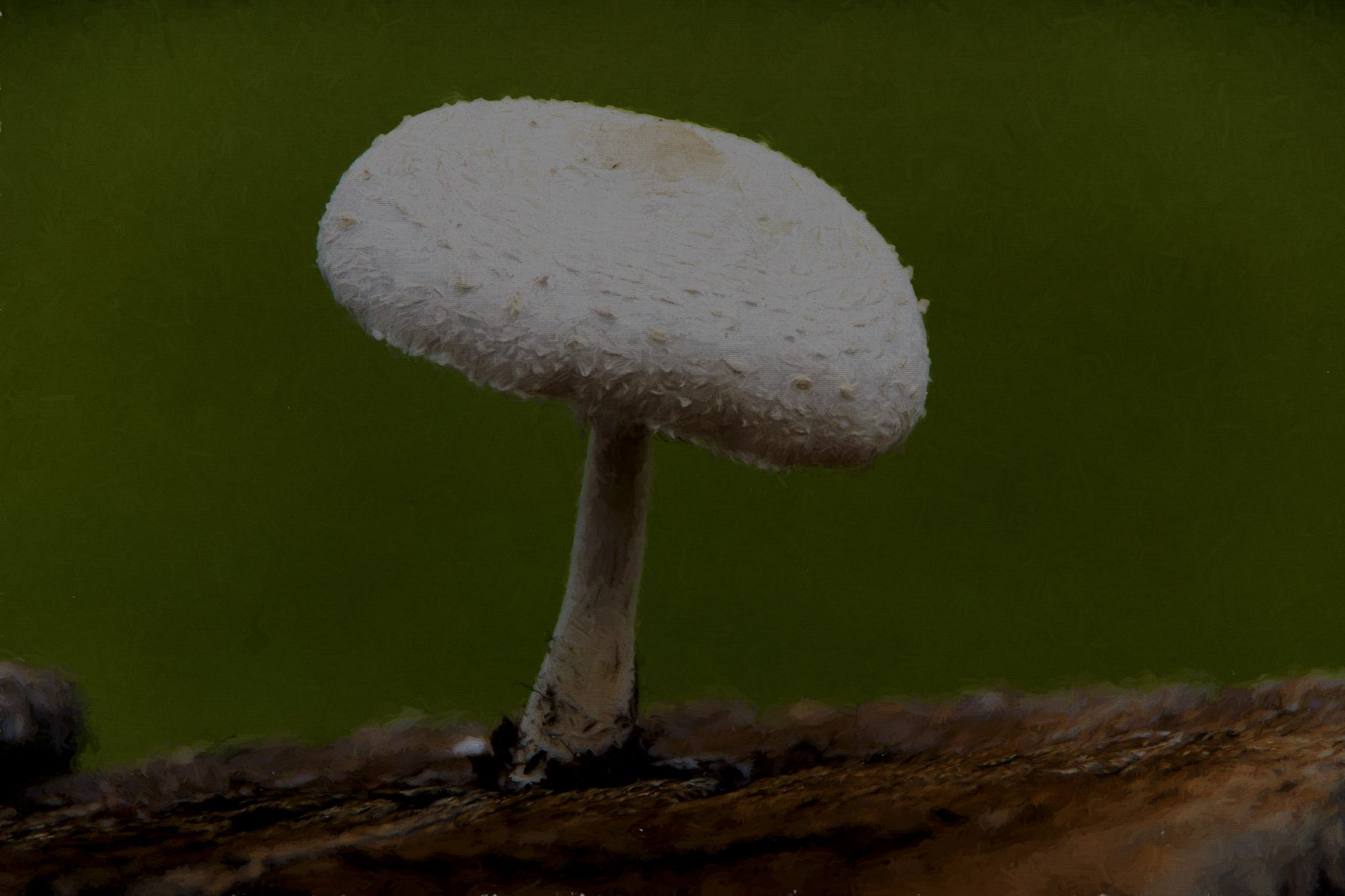 Mushroom by Dchester1001