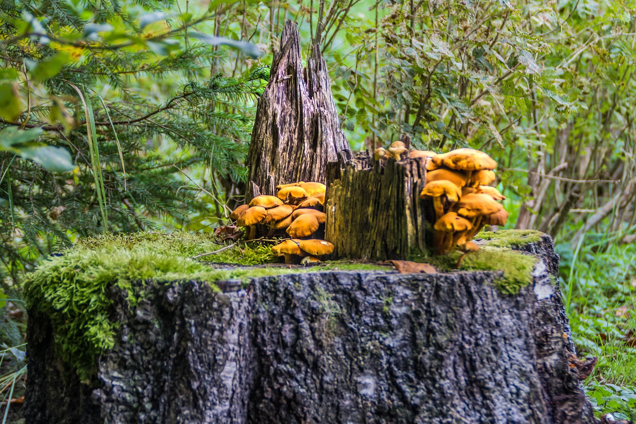 Mushrooms ... by SakariPartio