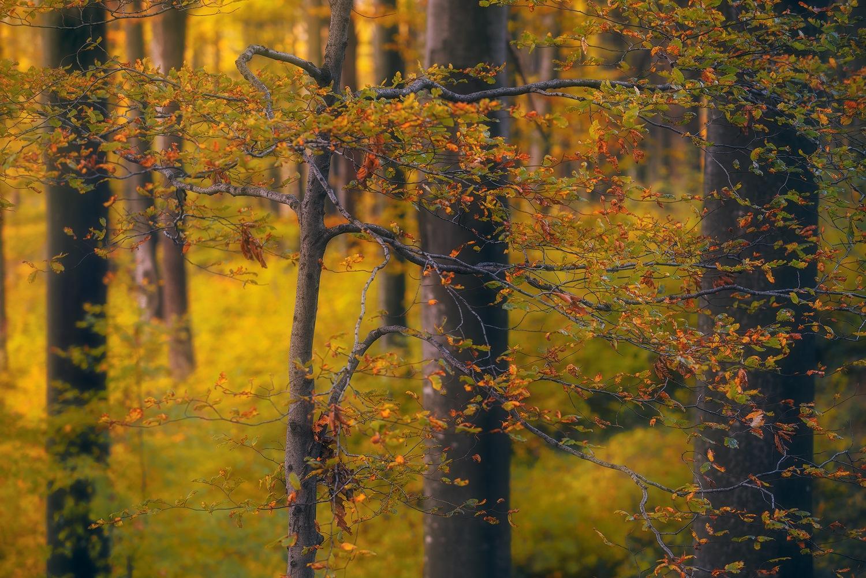 Golden forest by zsoltandrasszabo
