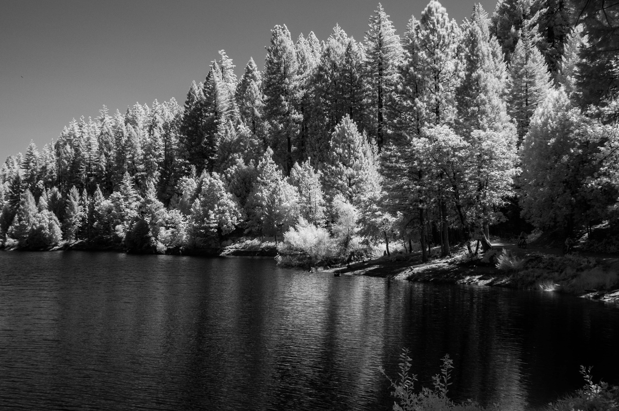 Infrared On the lake  by Craig Turner