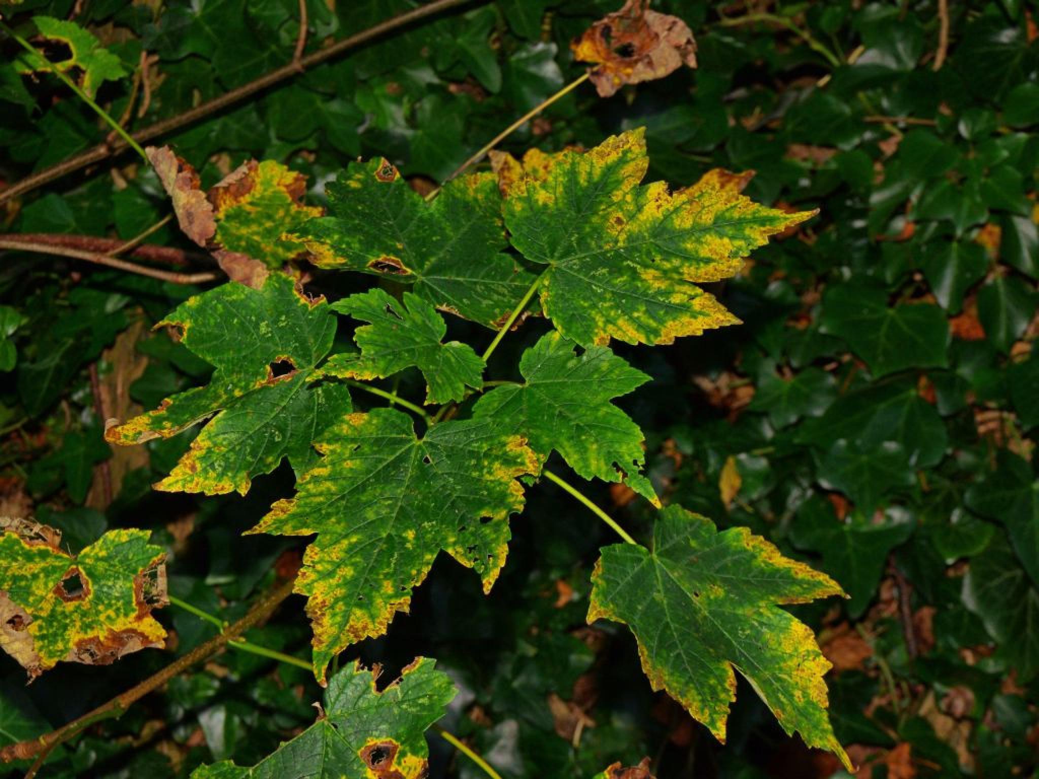 Autumn leaves by David Stewart