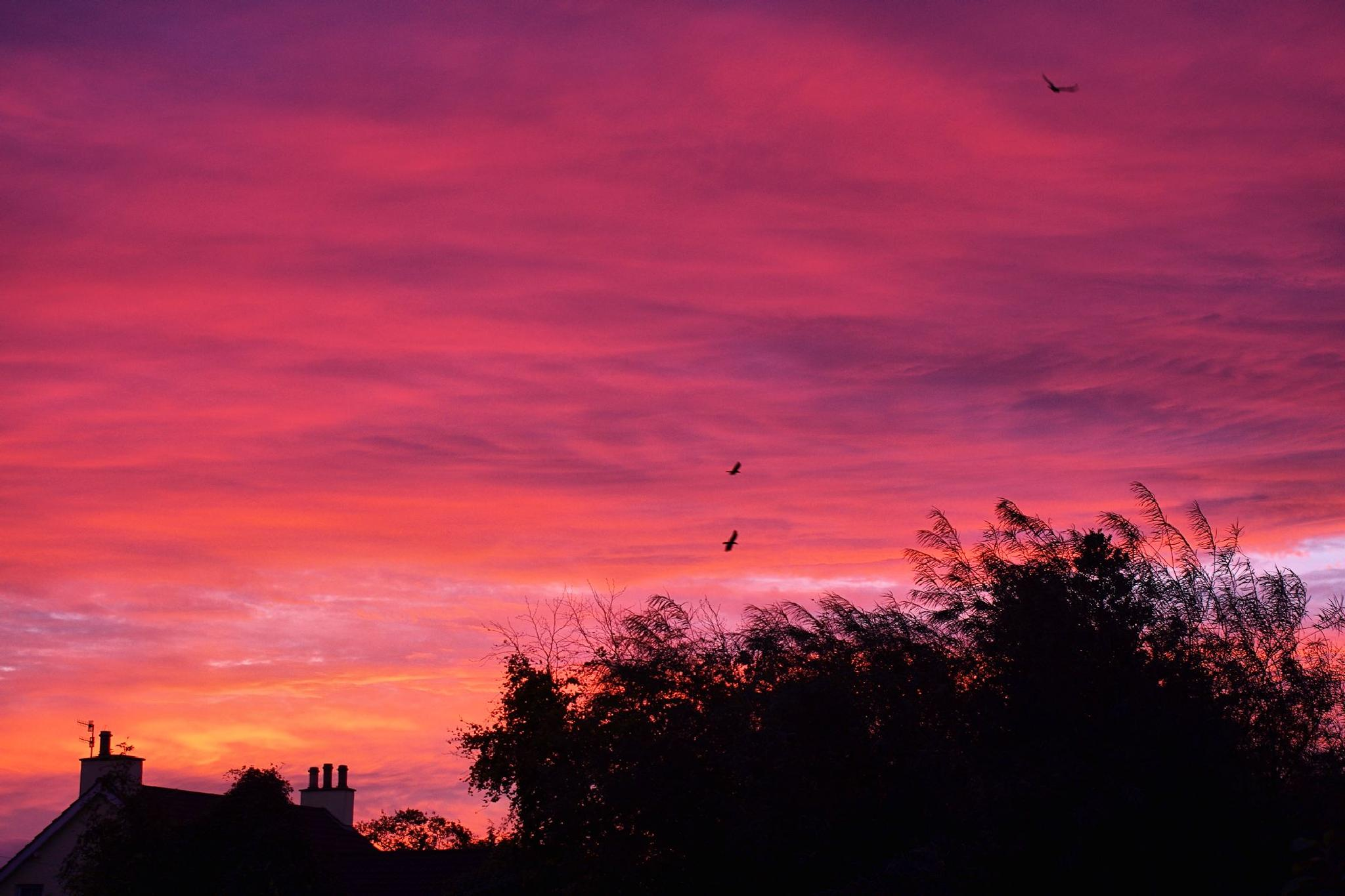 Photo in Astrophotography #sunrise #dawn #clouds #sky #autumn