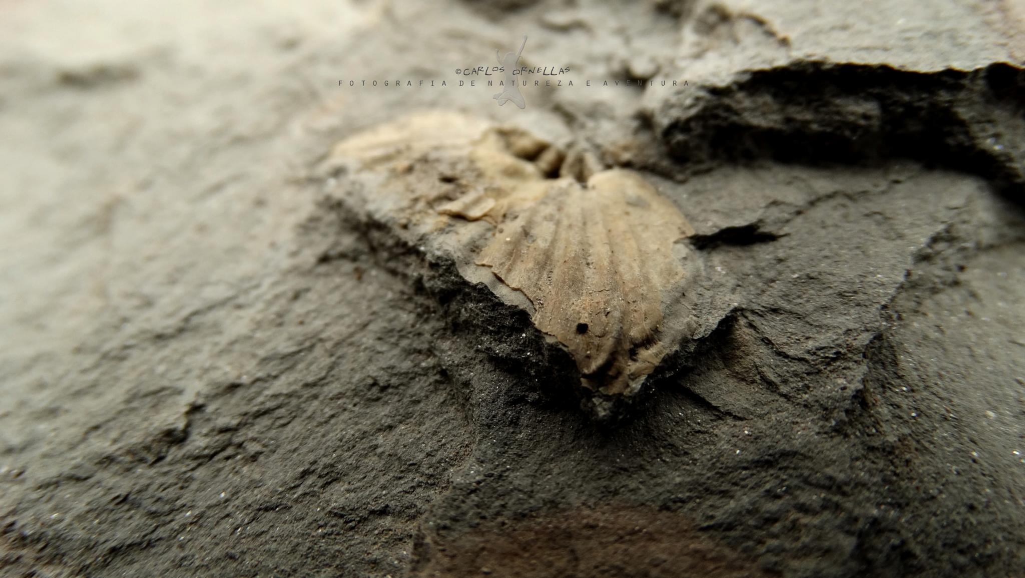 Fossils by Carlos Ornellas