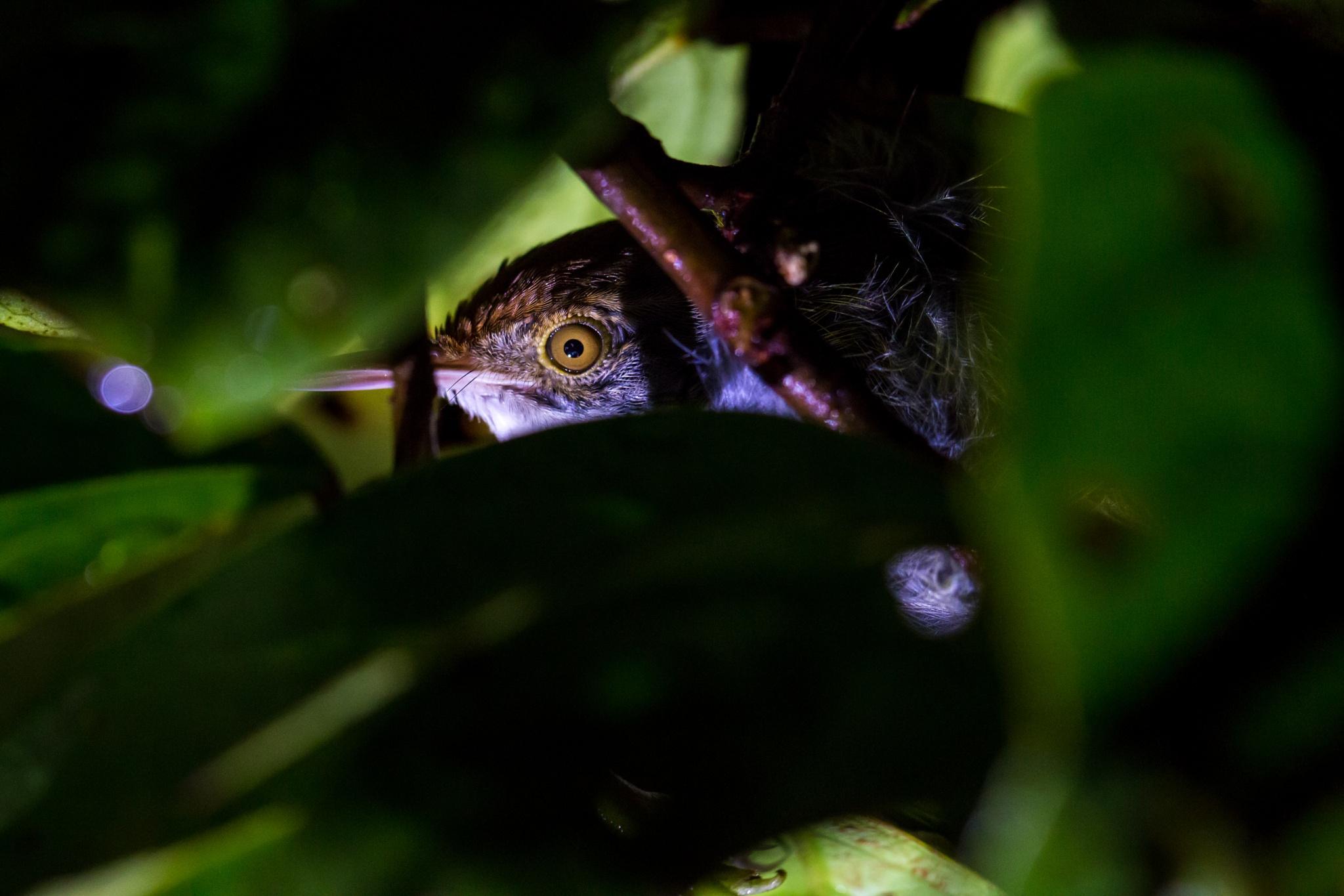 Hiding? Resting? Hunting? by Thomas Ho