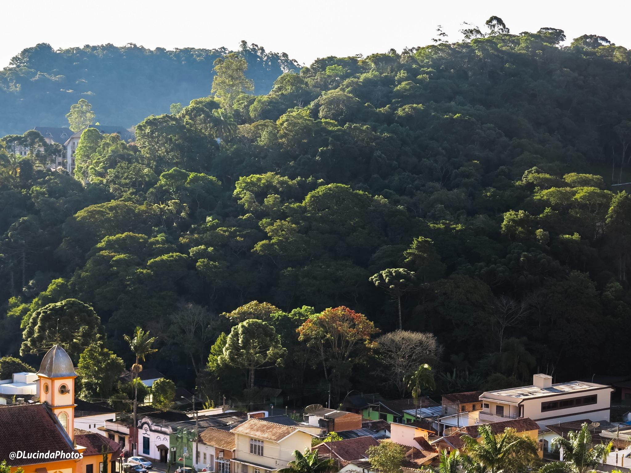 Santo Antônio do Pinhal - SP by denizelucinda