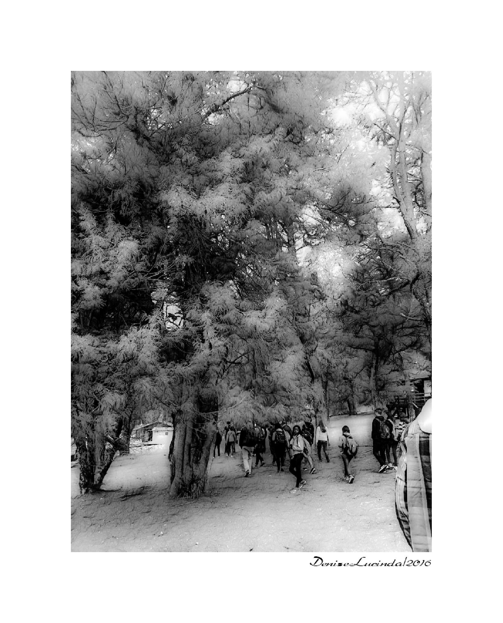 DigitalArt - Horto Florestal - Campos do Jordão - SP by denizelucinda
