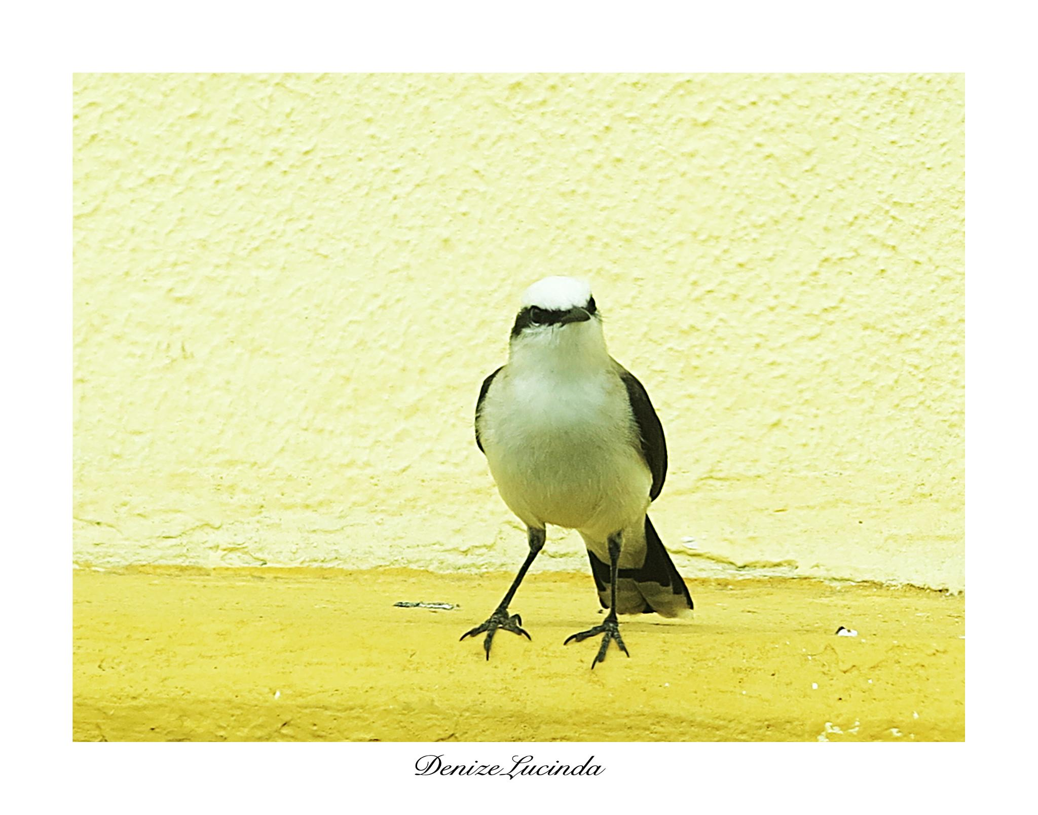 Lovely bird by denizelucinda
