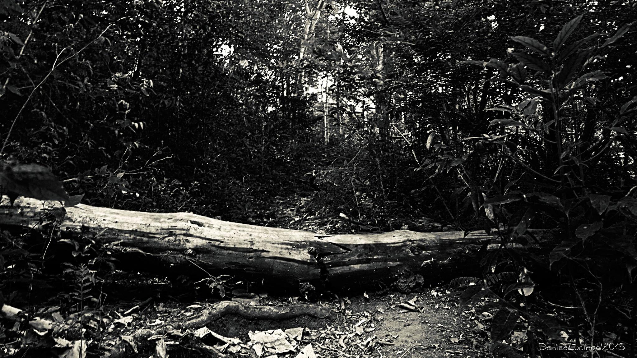 Trilha Ecológica by denizelucinda