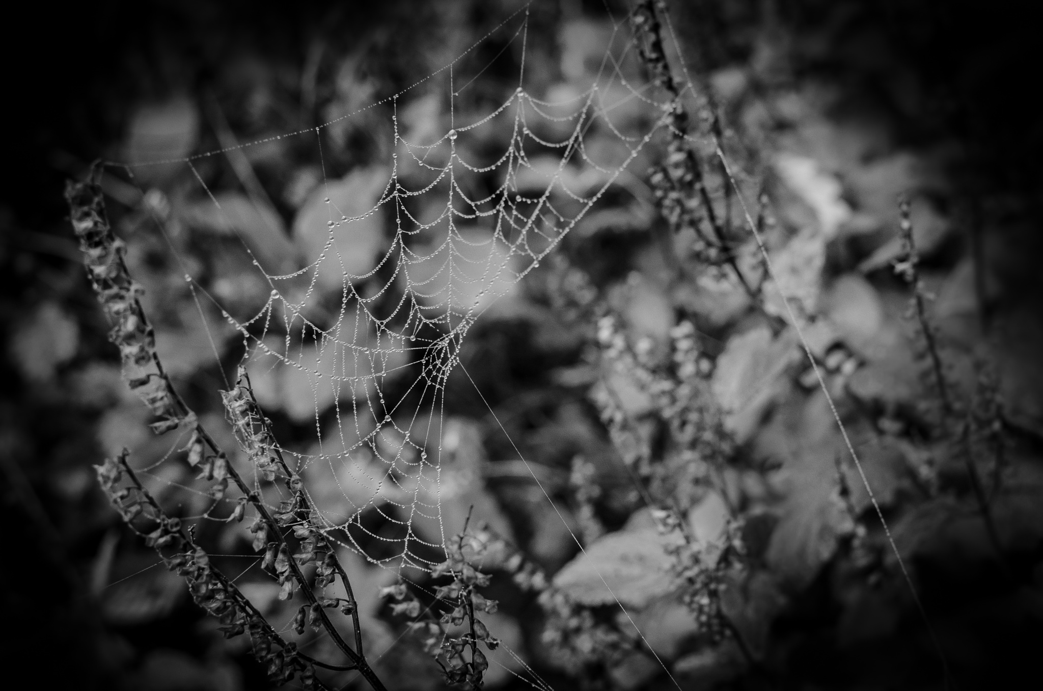 Spiderweb by oldmemorybook