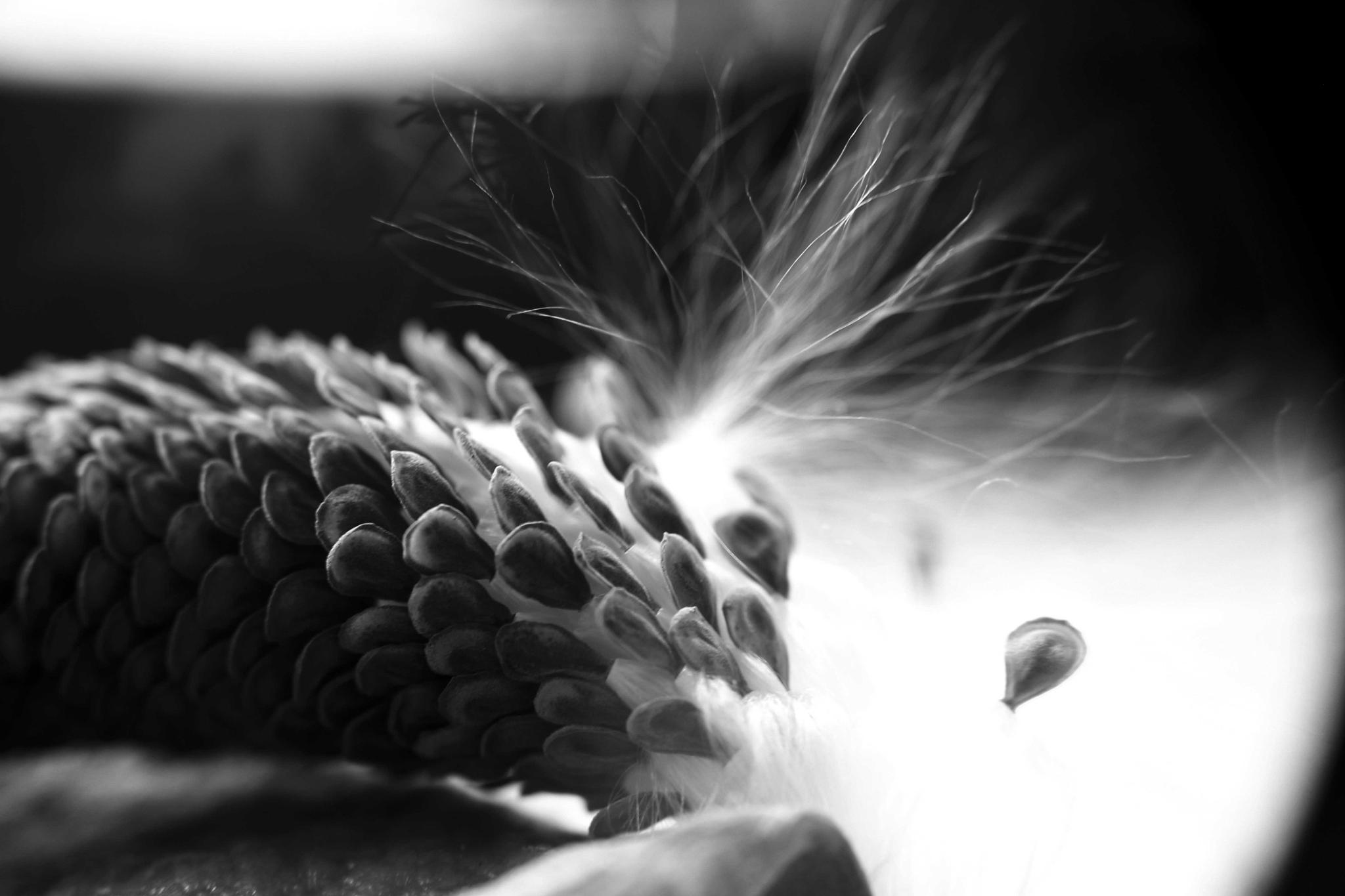 seeds of life by mohanchincholi