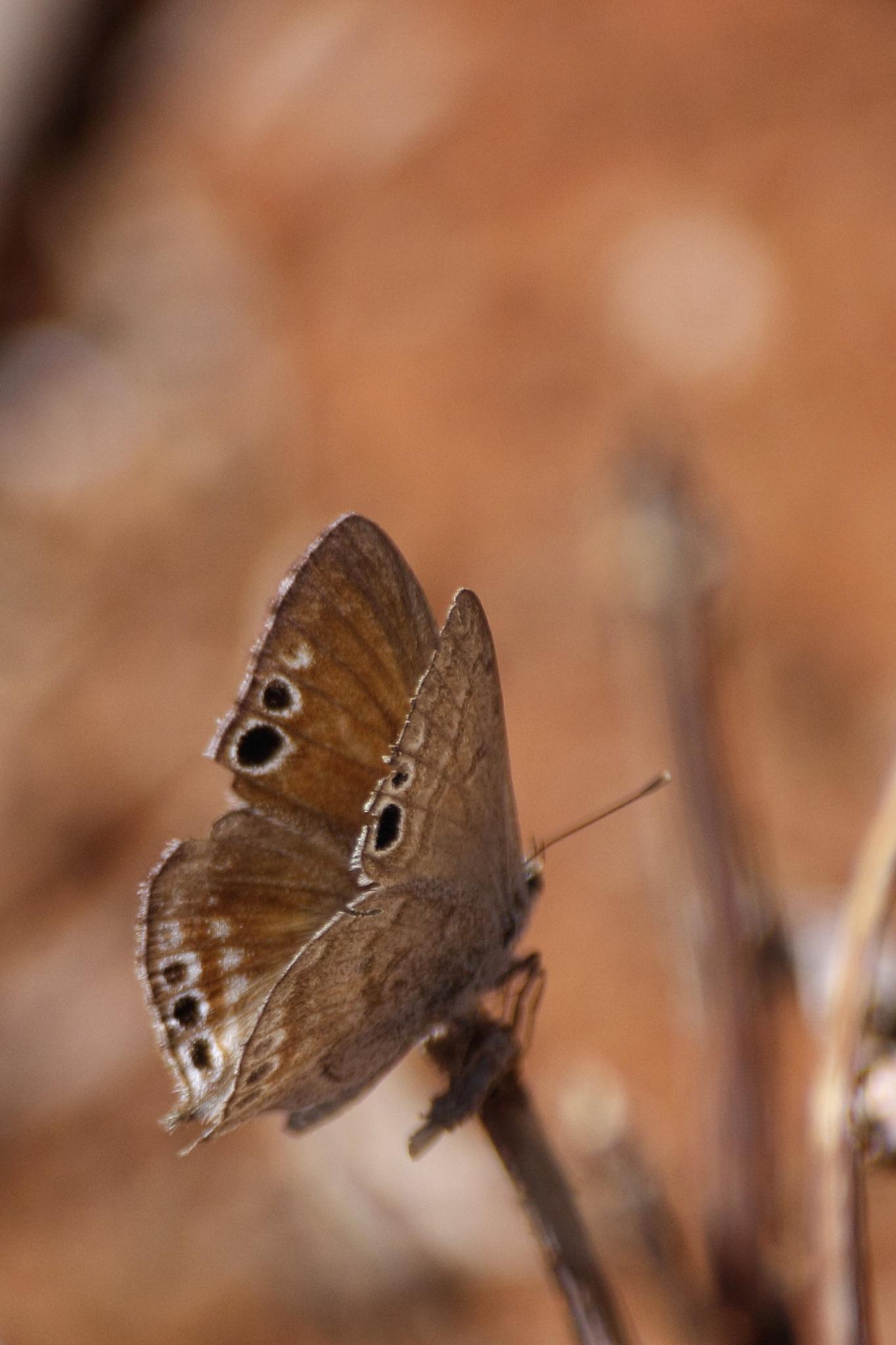 Butterfly by Marcel