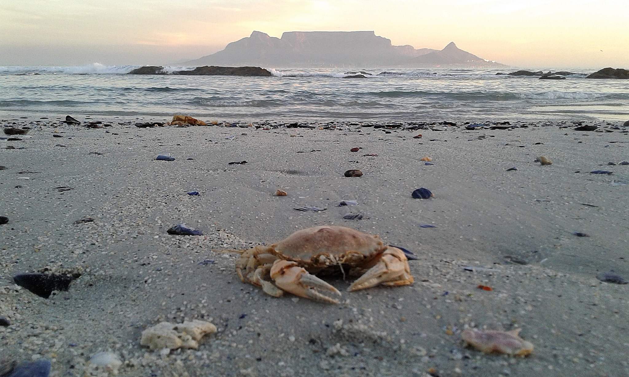 Crab on the beach by Marcel