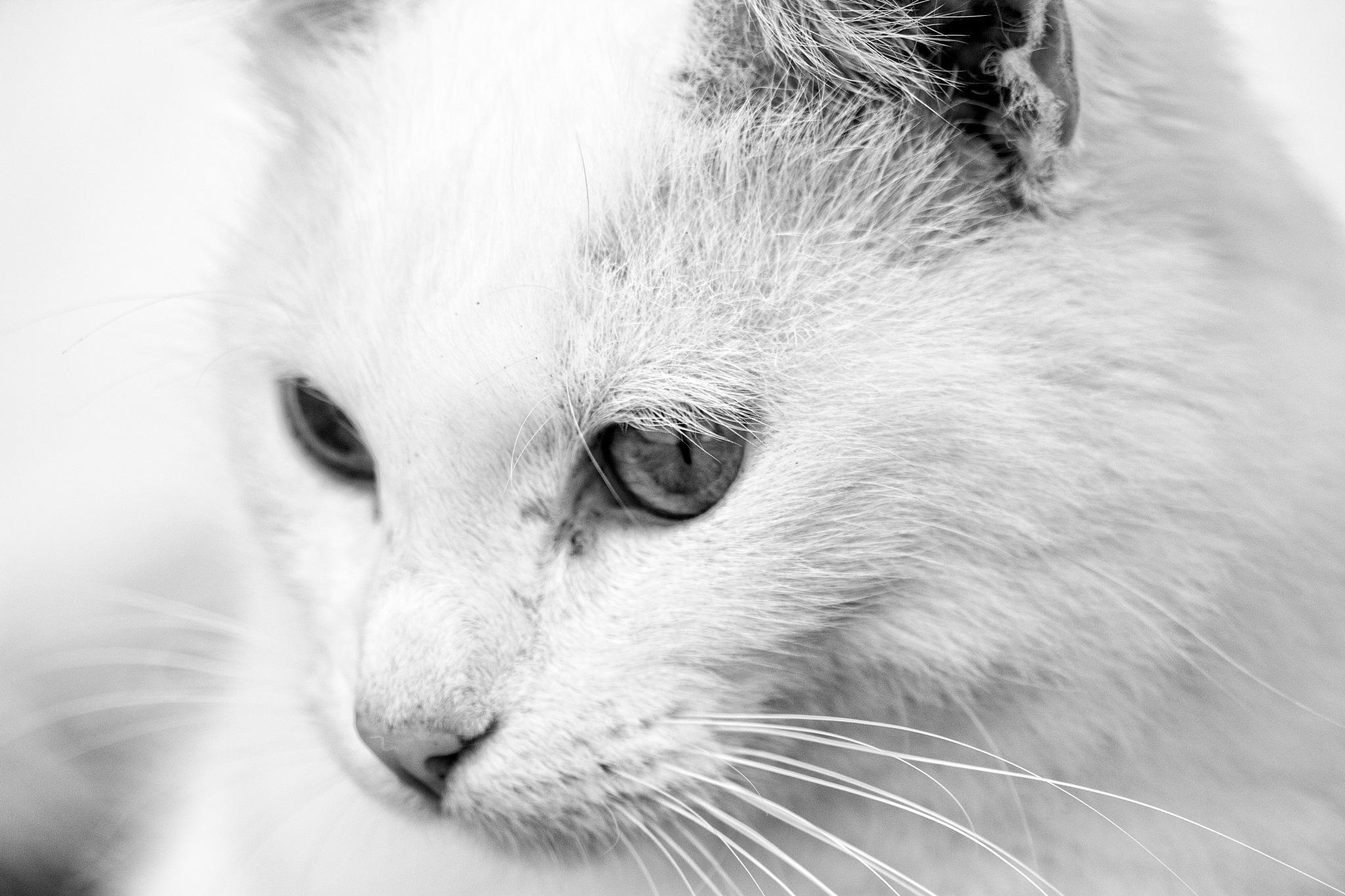 Cat by Marcel