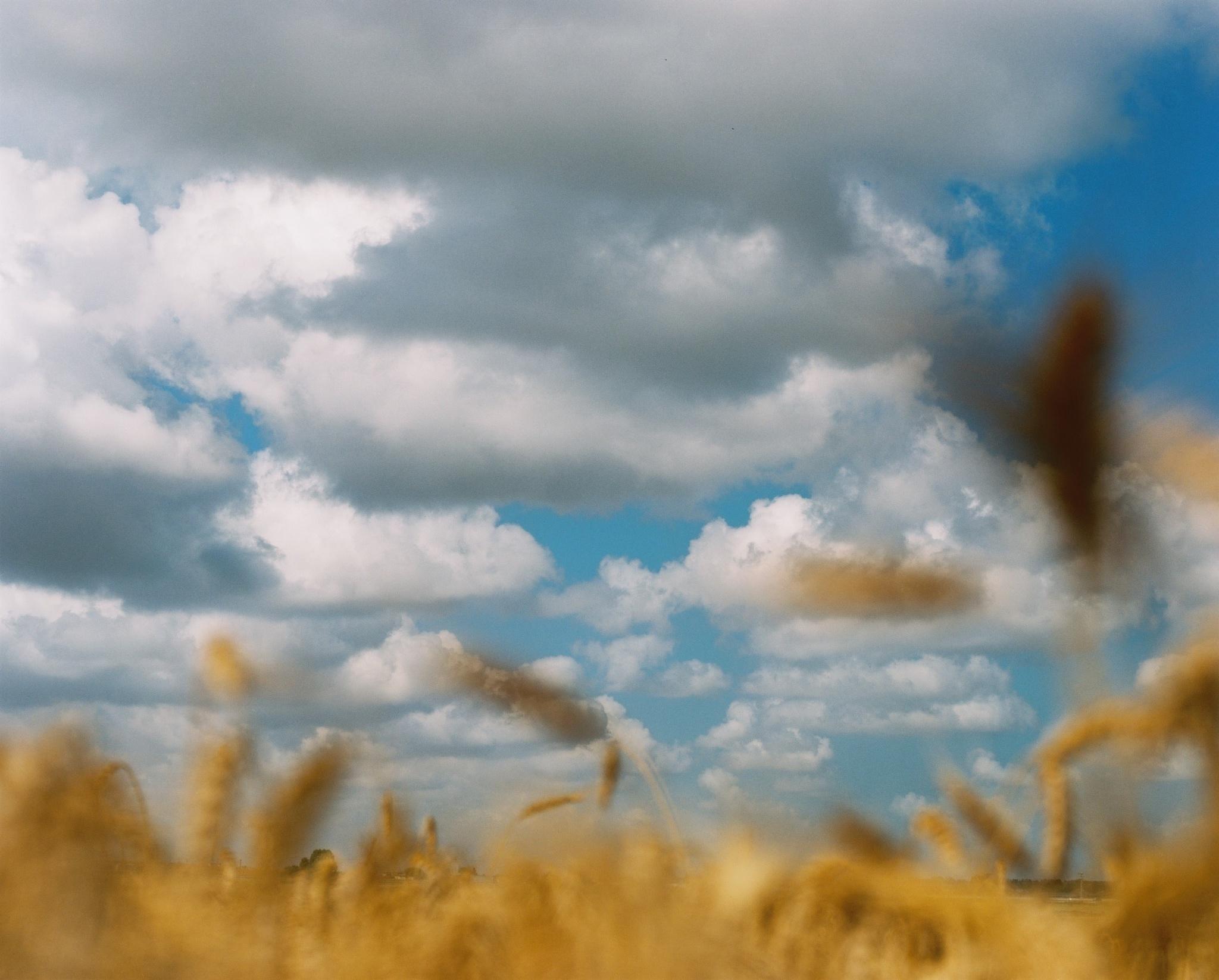 Clouds by Tomerneu